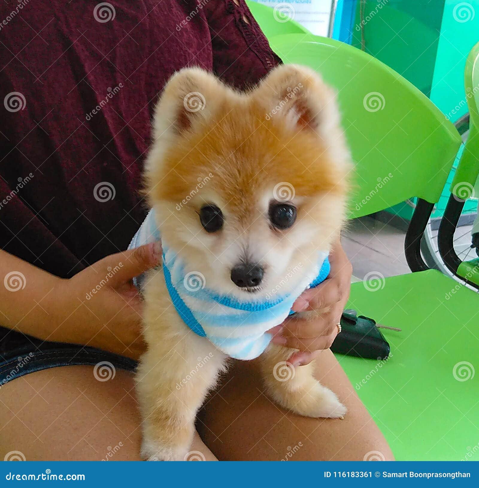 犬 種類 小型