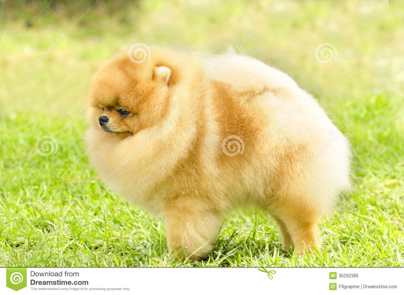 Displaying 16> Images For - Puppies That Stay Small...