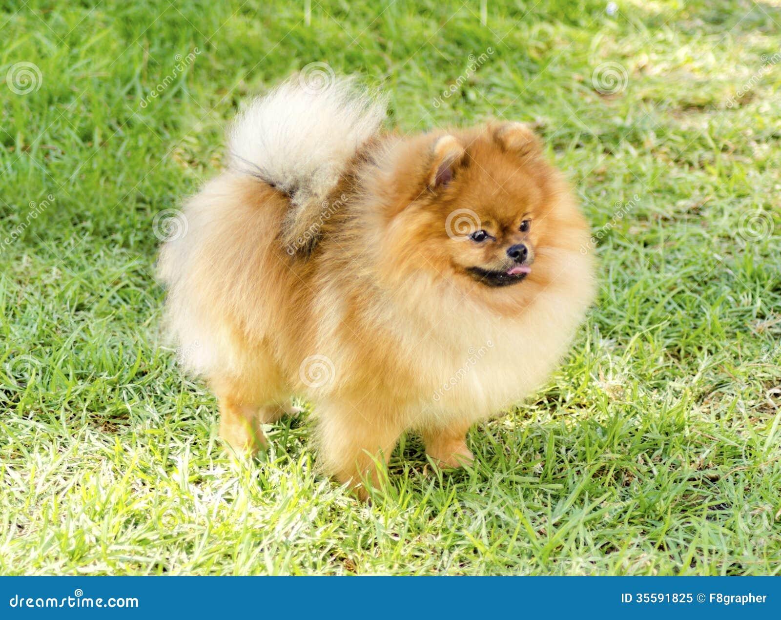 Fat Fluffy Dog Breeds