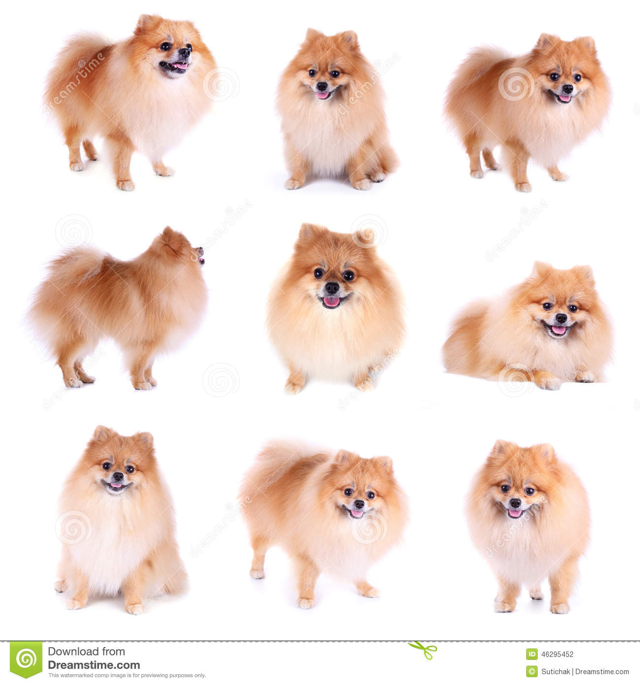 Starting a Dog Grooming Service – Sample Business Plan Template