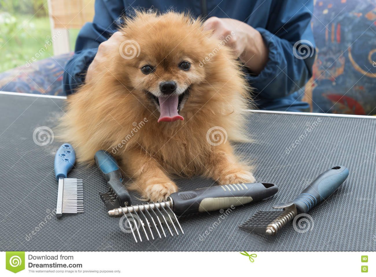 Types Of Dog Grooming Combs