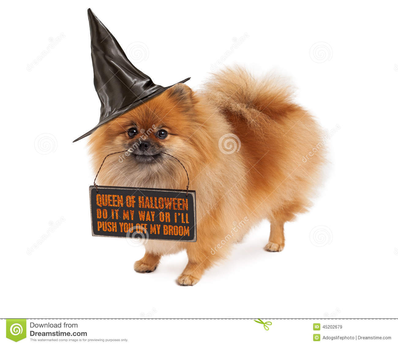 Pomeranian Halloween Witch Dog Stock Image   Image Of Isolated, Costume:  45202679