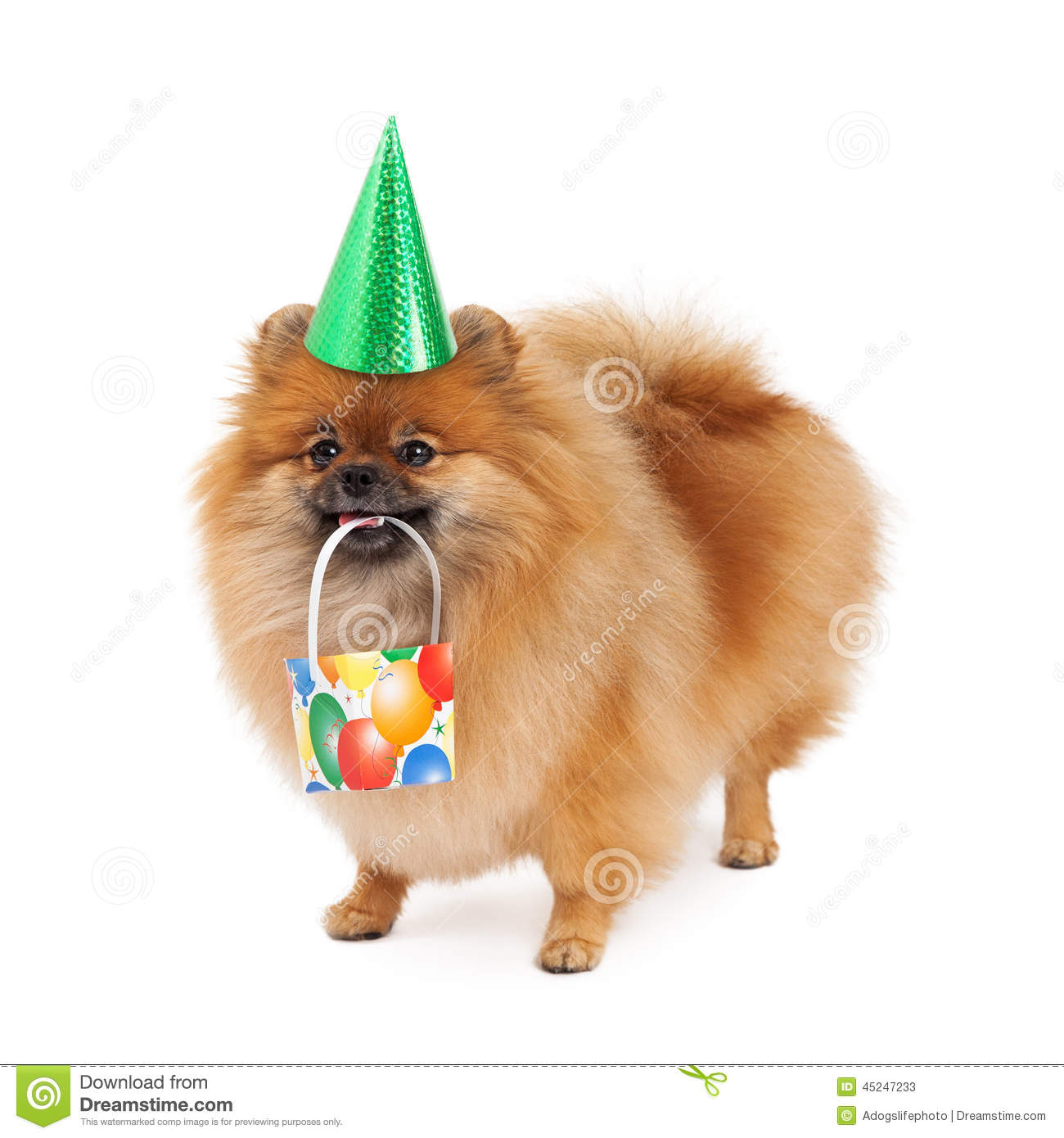 Pomeranian Party Hat And Present