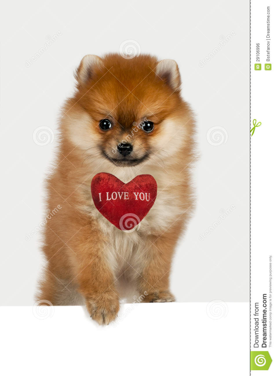 how to get a puppy to love you