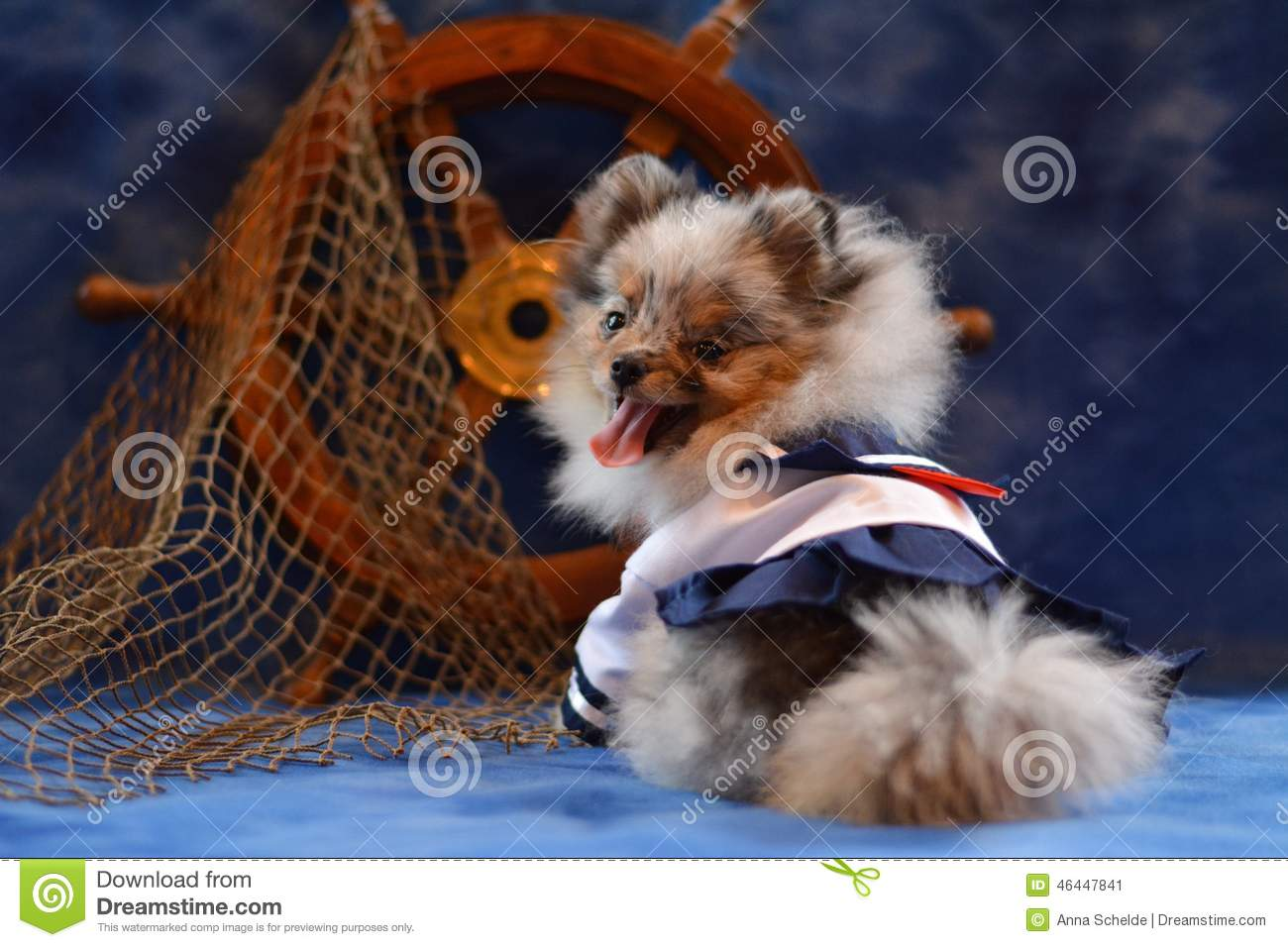 pomeranian puppy stock image. image of tired, costume - 46447841