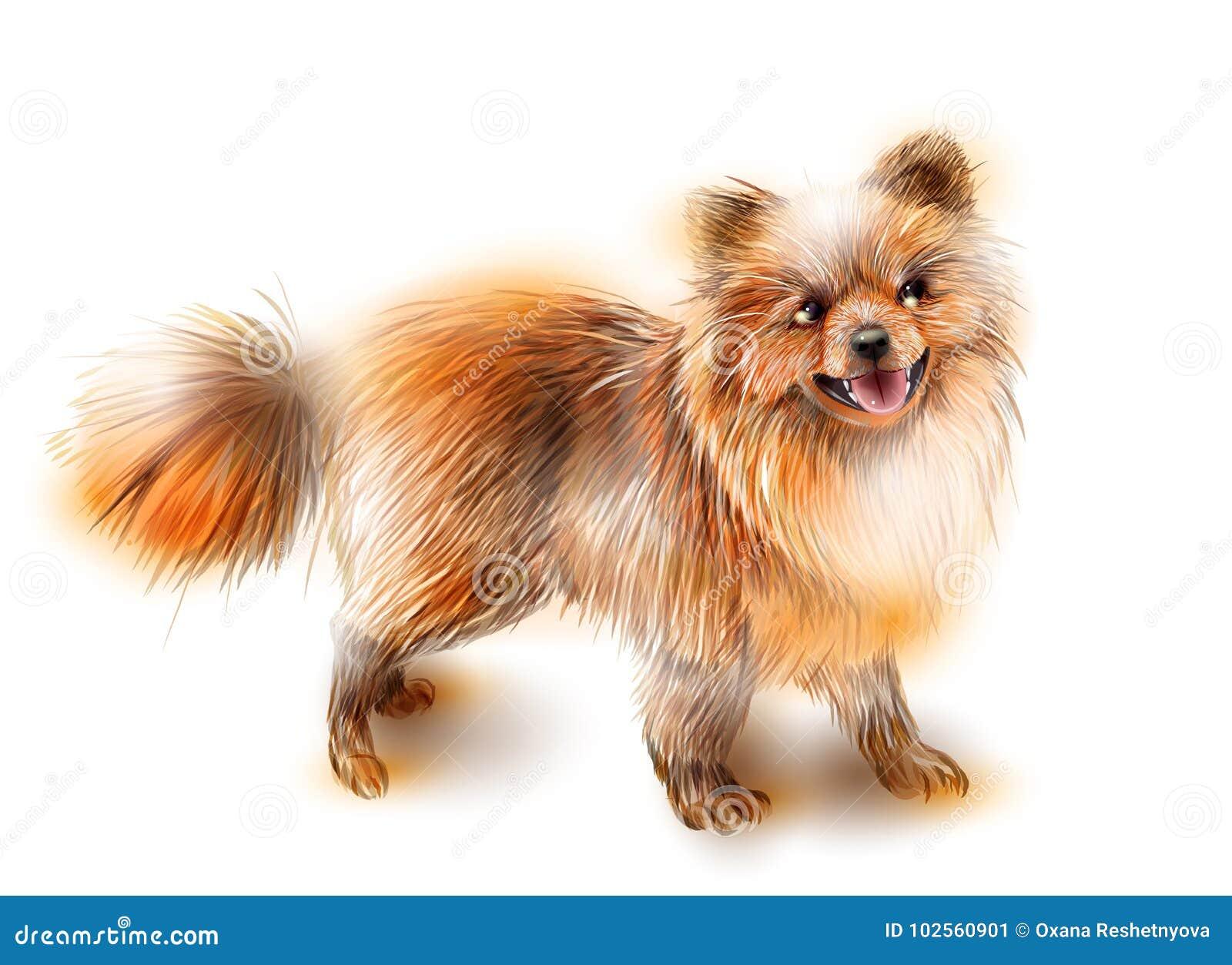 Pomeranian Spitz Hund Ist Das Symbol Von 2018 Vektor Abbildung