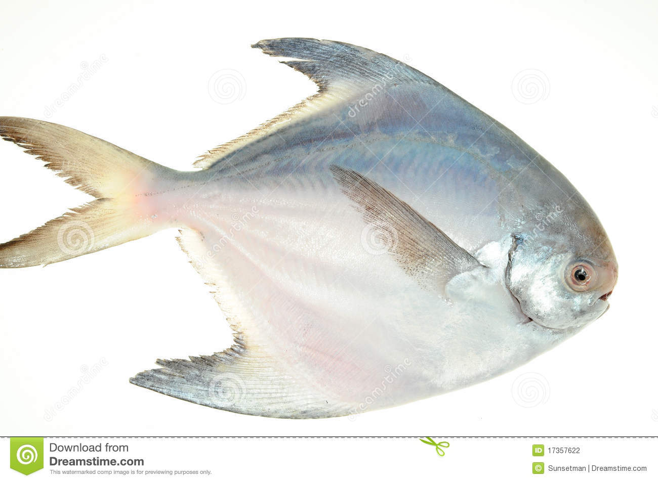 Pomfret fish stock photo image of food marine aquatic for Image of fish