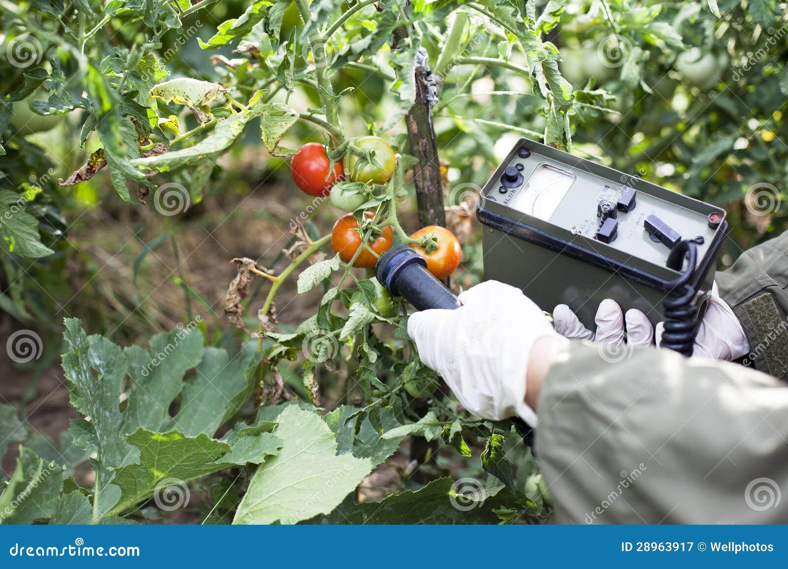 Pomiarowi napromienianie poziomy pomidor