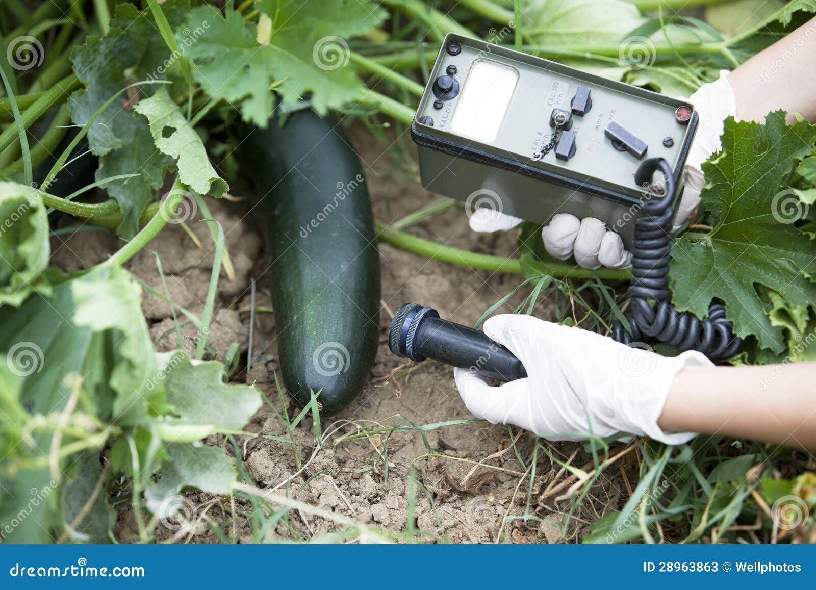 Pomiarowi napromienianie poziomy zucchini