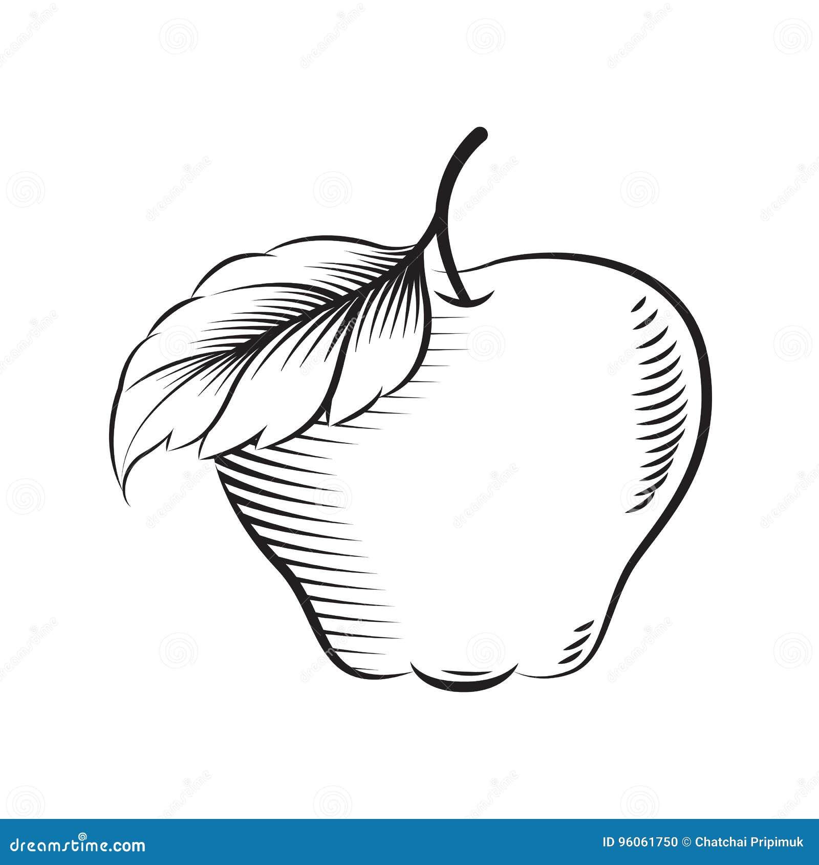 Pomme d aspiration, vecteur