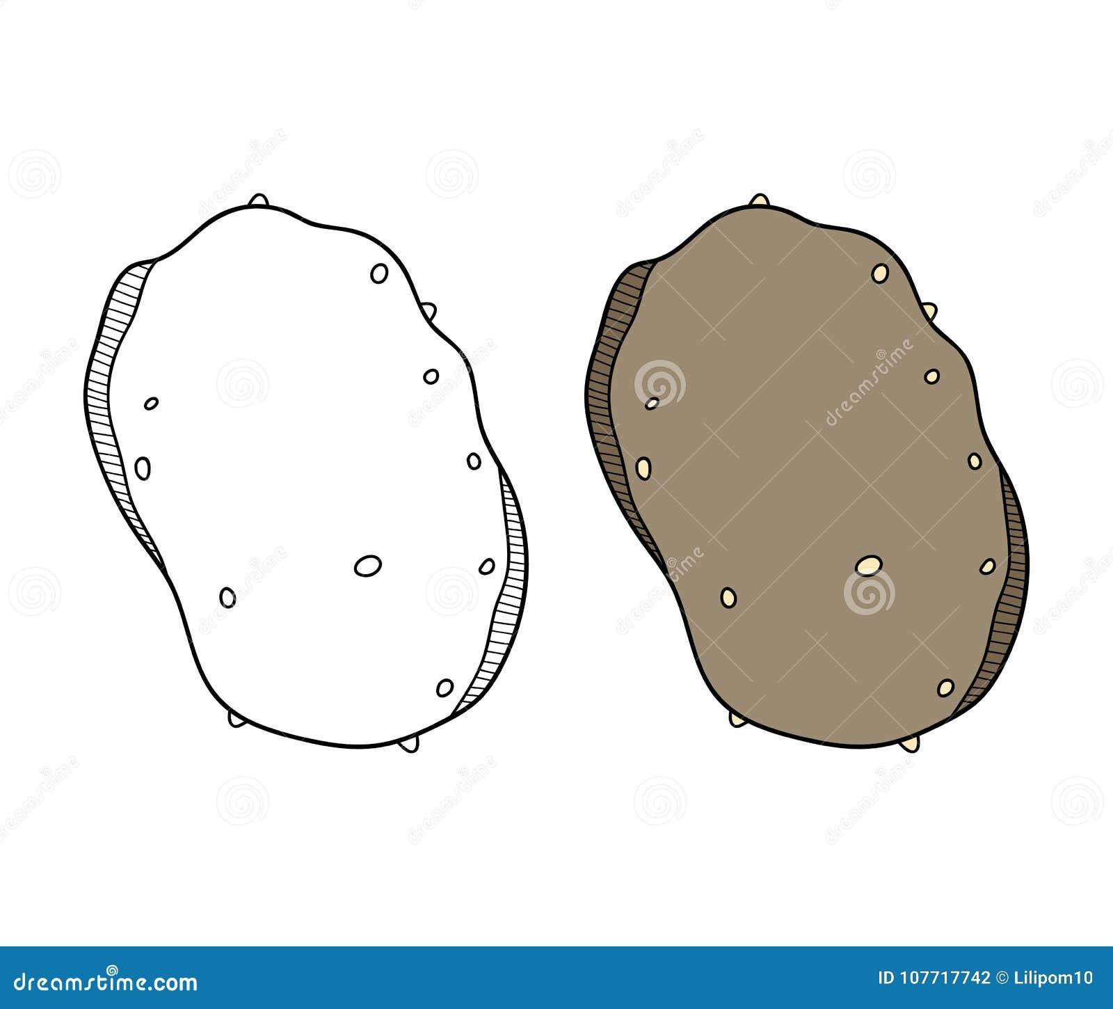 Pomme De Terre Legume Illustration Noire Et Blanche Pour Livre De