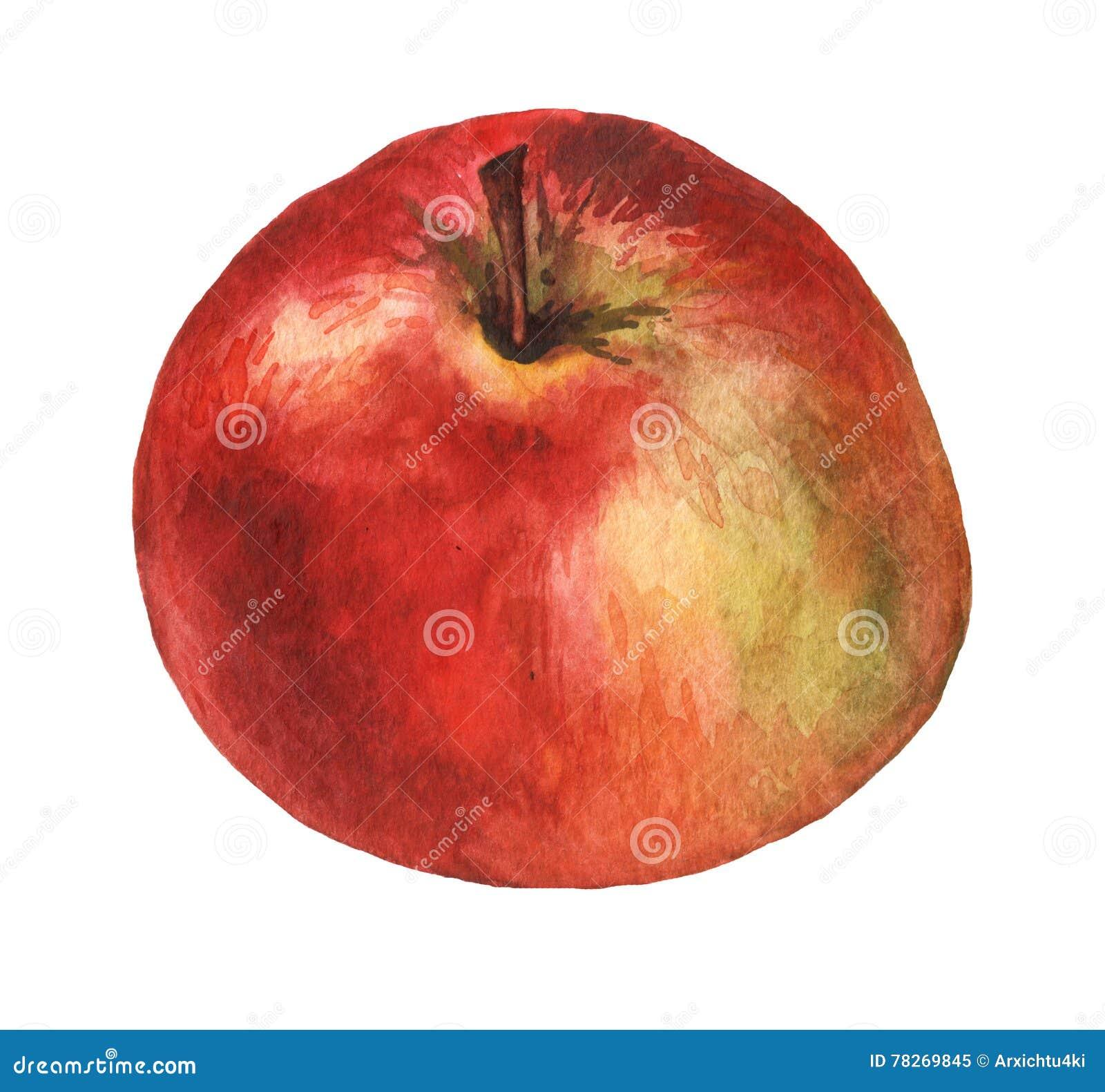 Pomme rouge peinture tir e par la main d 39 aquarelle for Peinture vert pomme