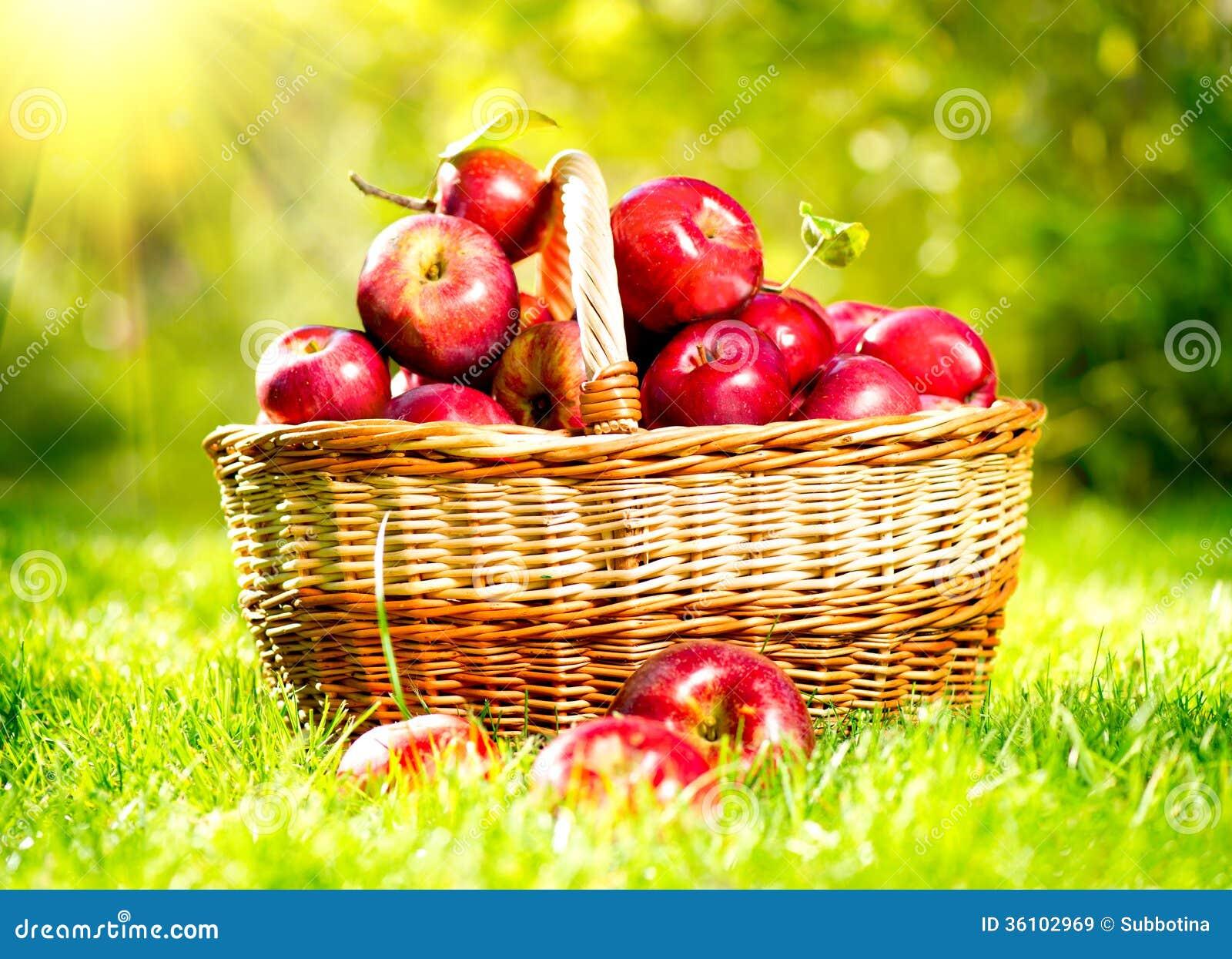 pommes dans un panier image stock image du frais pommes 36102969. Black Bedroom Furniture Sets. Home Design Ideas