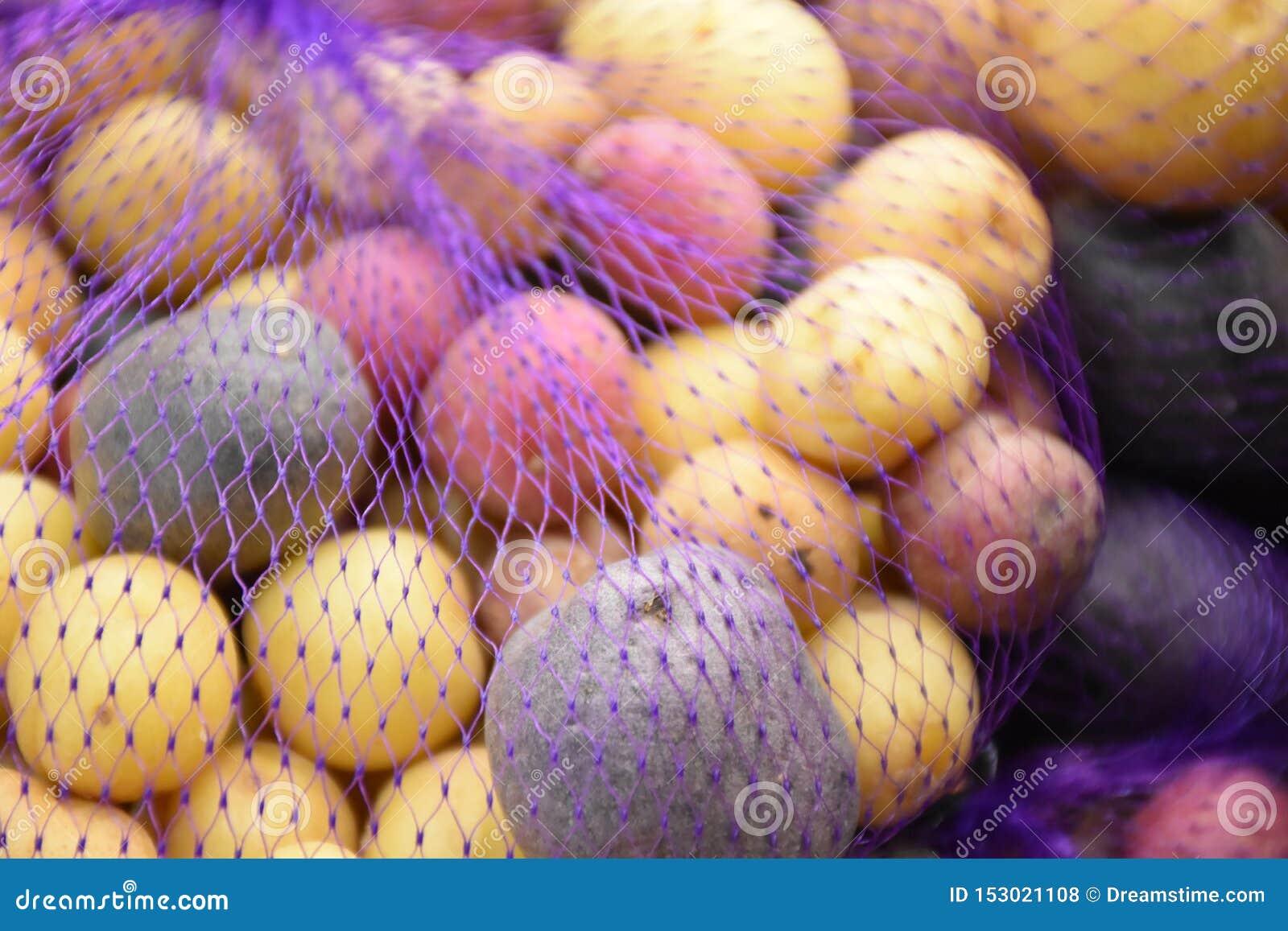 Pommes de terre courantes de pommes de terre d arc-en-ciel