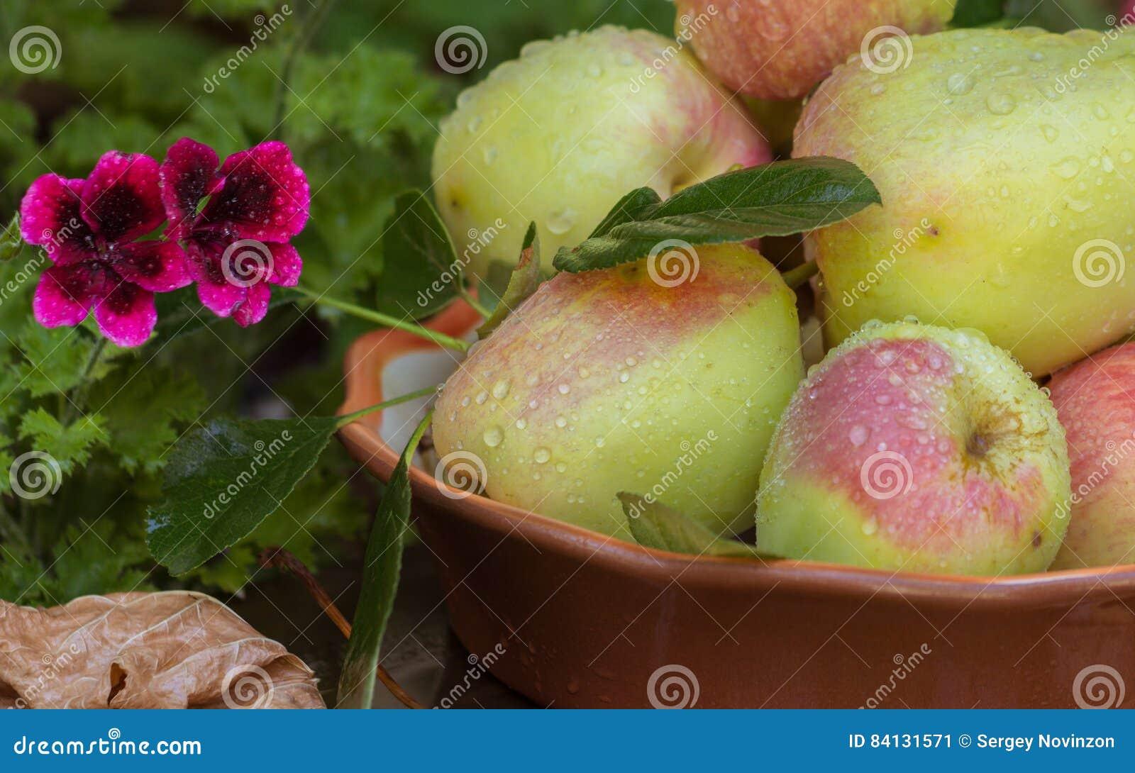 Pommes et feuilles