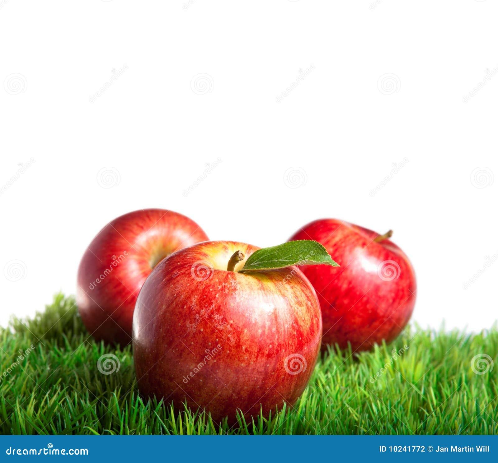 Pommes royales de gala