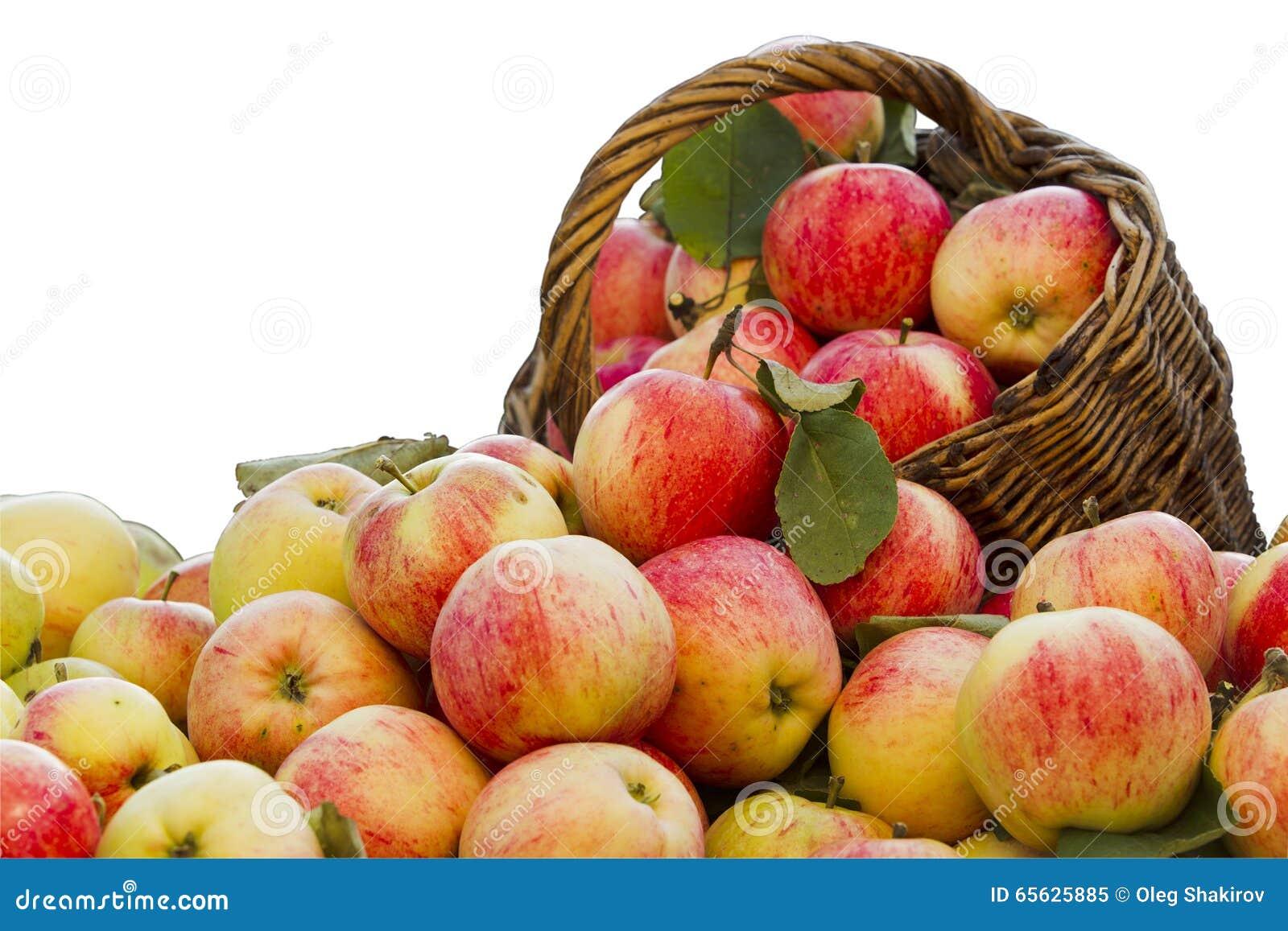 Pommes sur un fond blanc