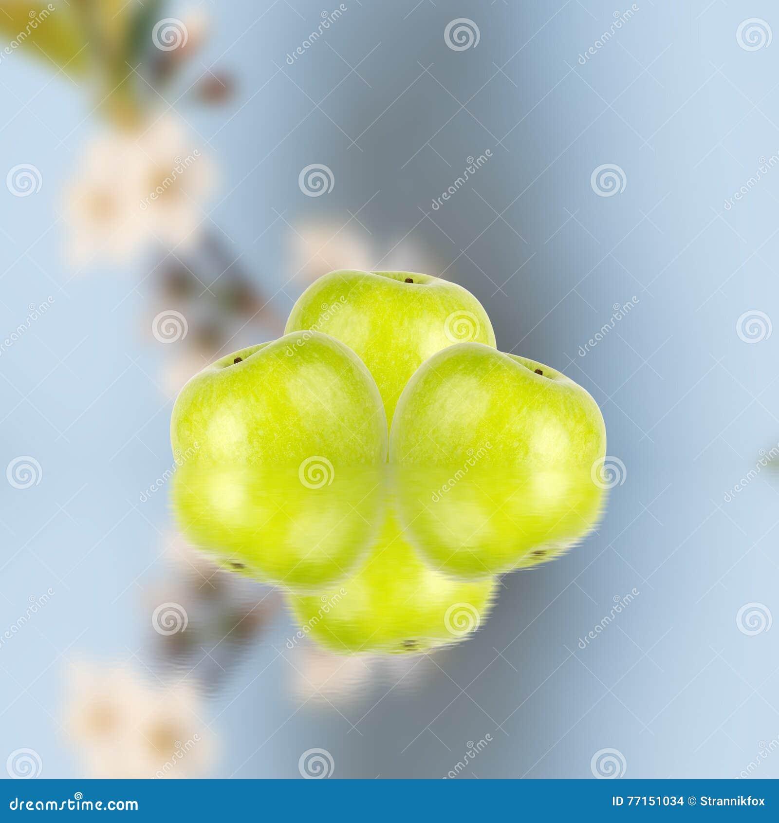Pommes vertes avec des fleurs de cerise