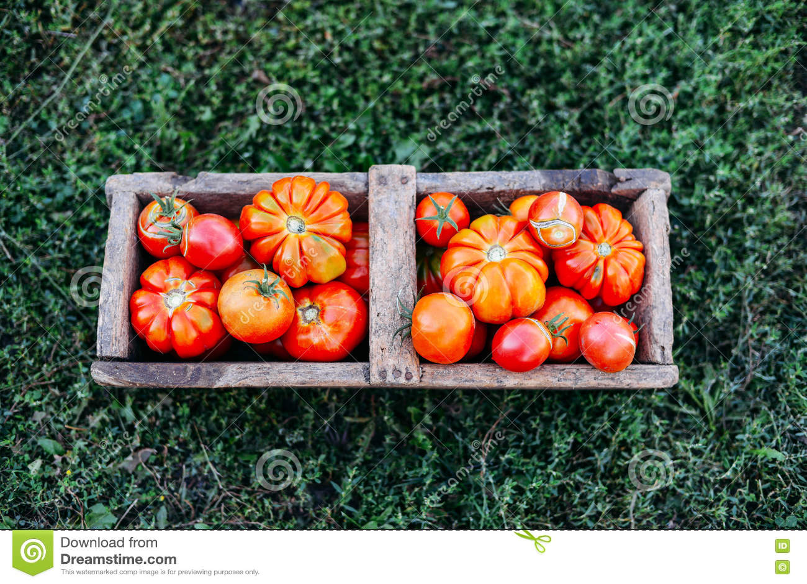 Pomodori assortiti in sacchi di carta marroni Vari pomodori in ciotola