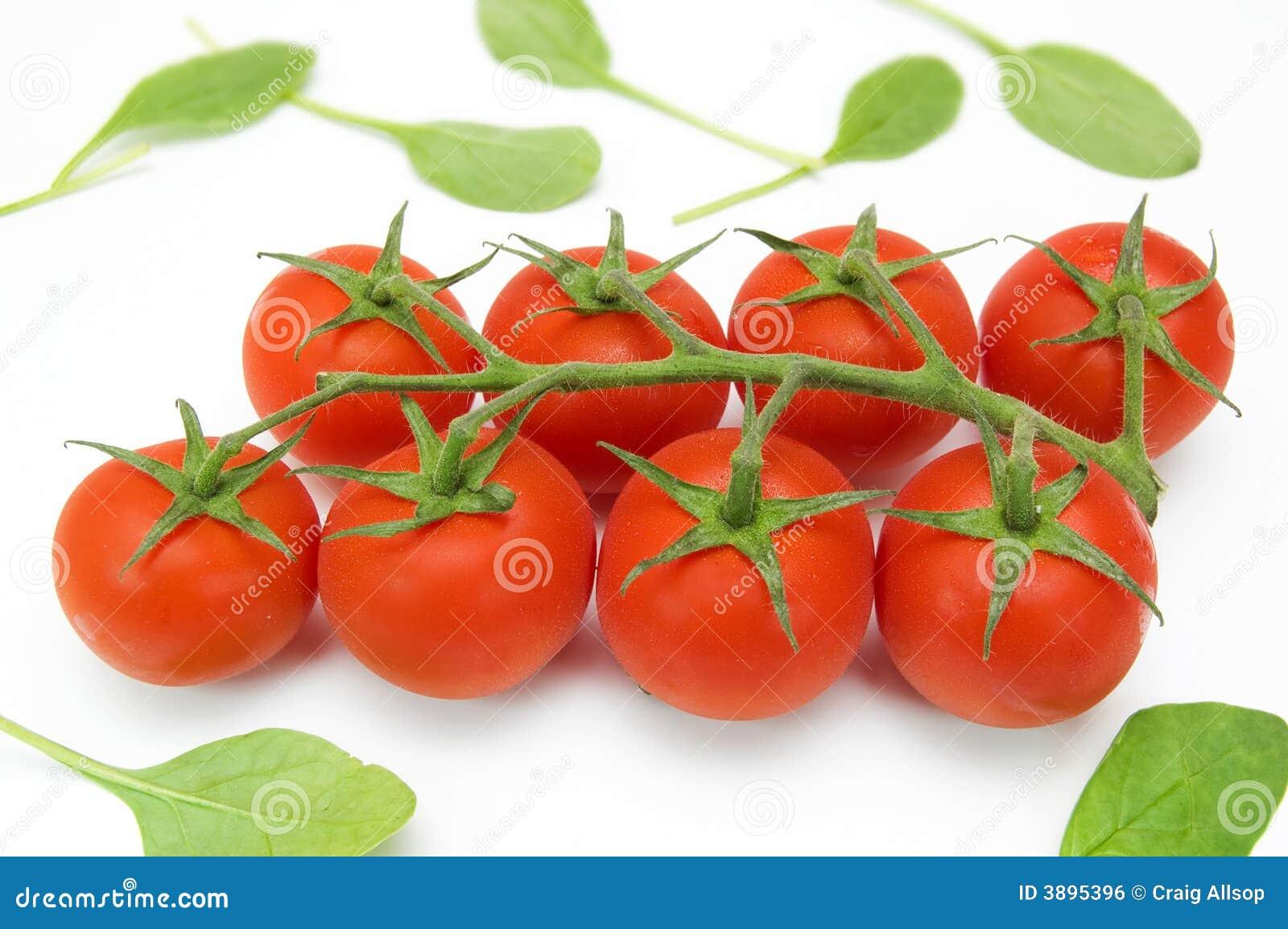 Pomodori di ciliegia sulla vite