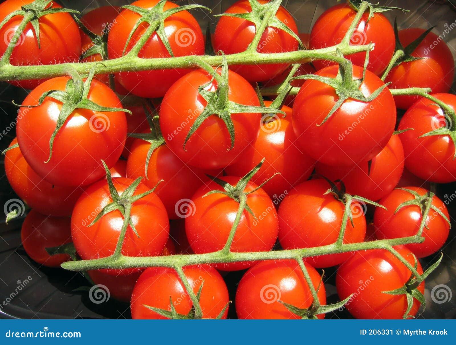 Pomodori sulla vite