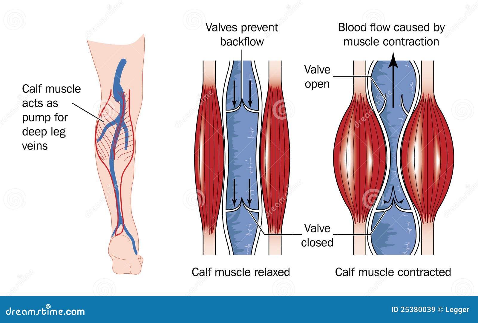 cours de pathologie cardiaque pdf