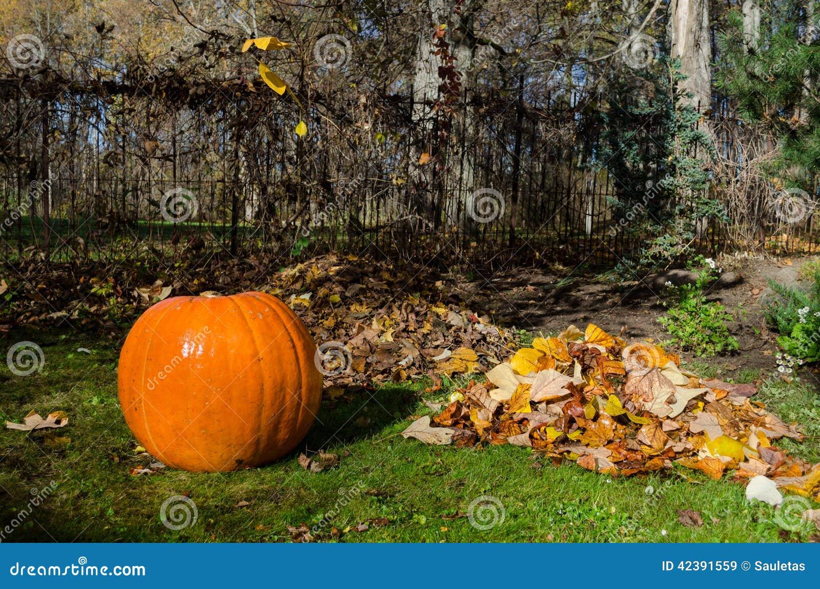 Pompoen en stapel droge bladeren Herfst Concept