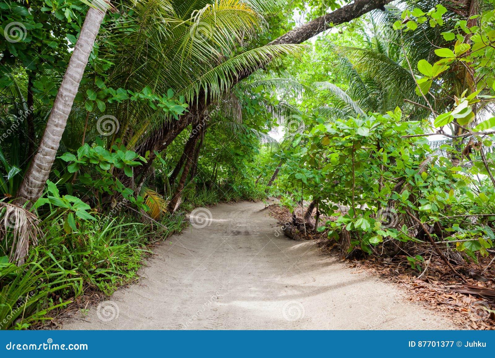 Poncez la route à la plage dans la forêt tropicale