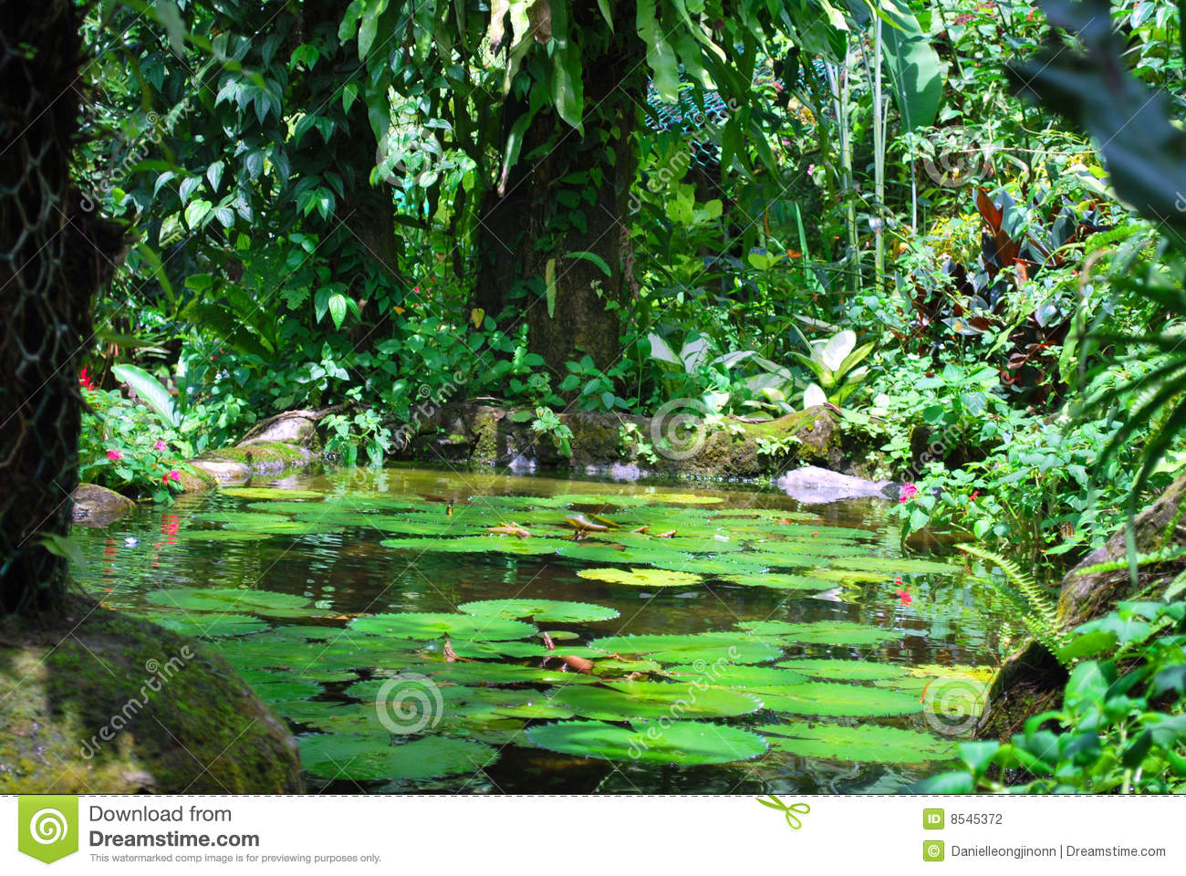 Pond Stock Photography Image 8545372