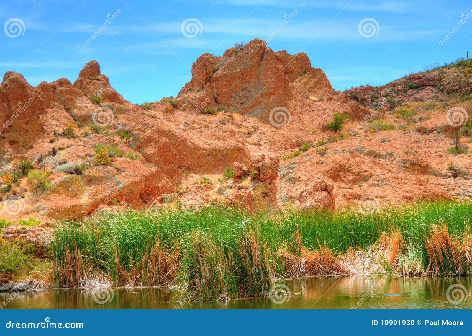 Pond In The Arizona Mountains Stock Photo Image 10991930