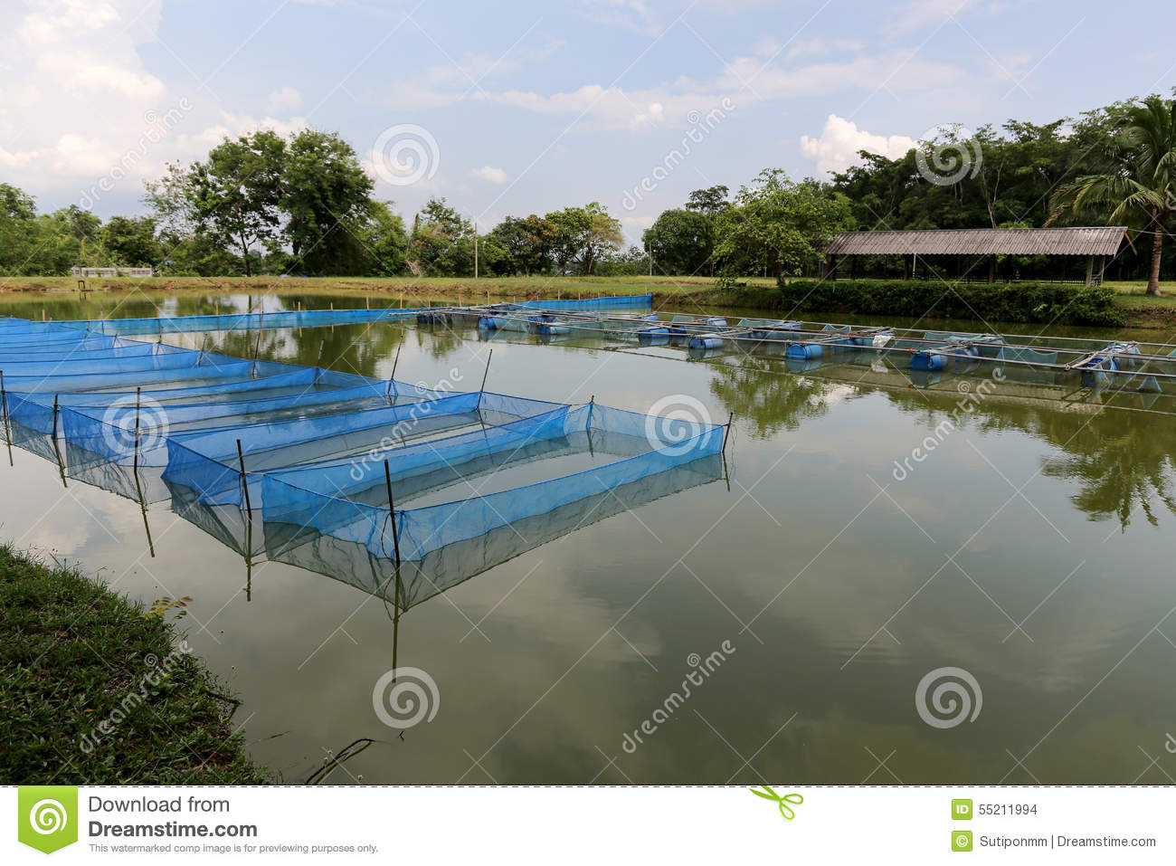 Pond cage culture stock photo image of sufficiency water for Fish farming ponds