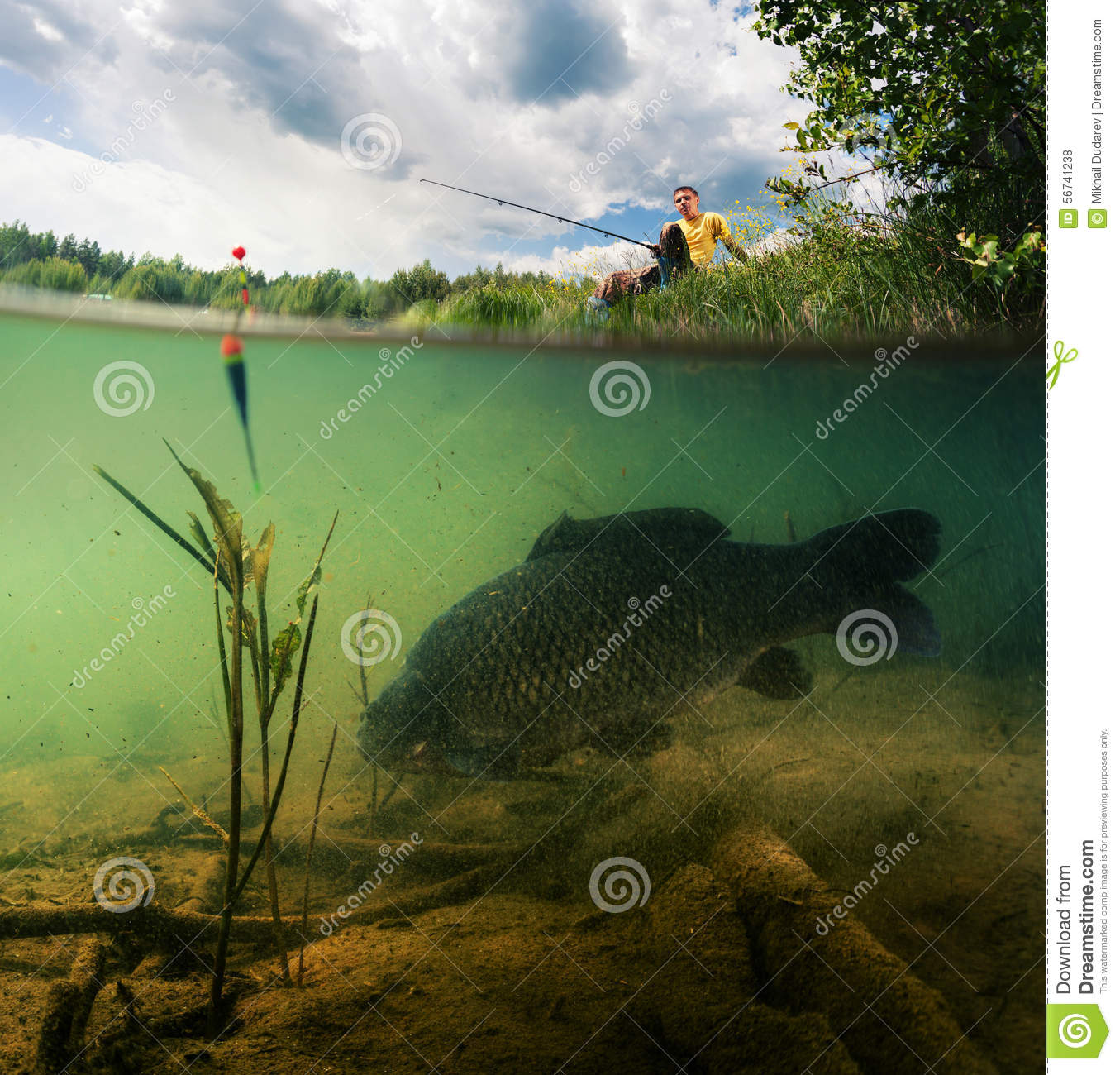 Pond with carp stock photo image 56741238 for Surface fish ponds