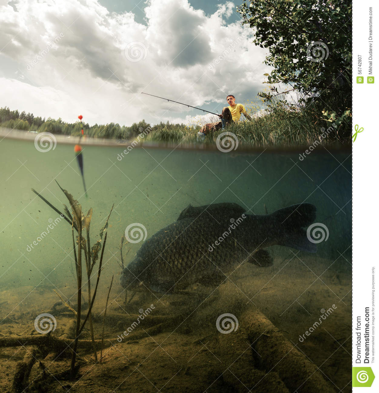 Pond with carp stock photo image 56742807 for Big fish pond