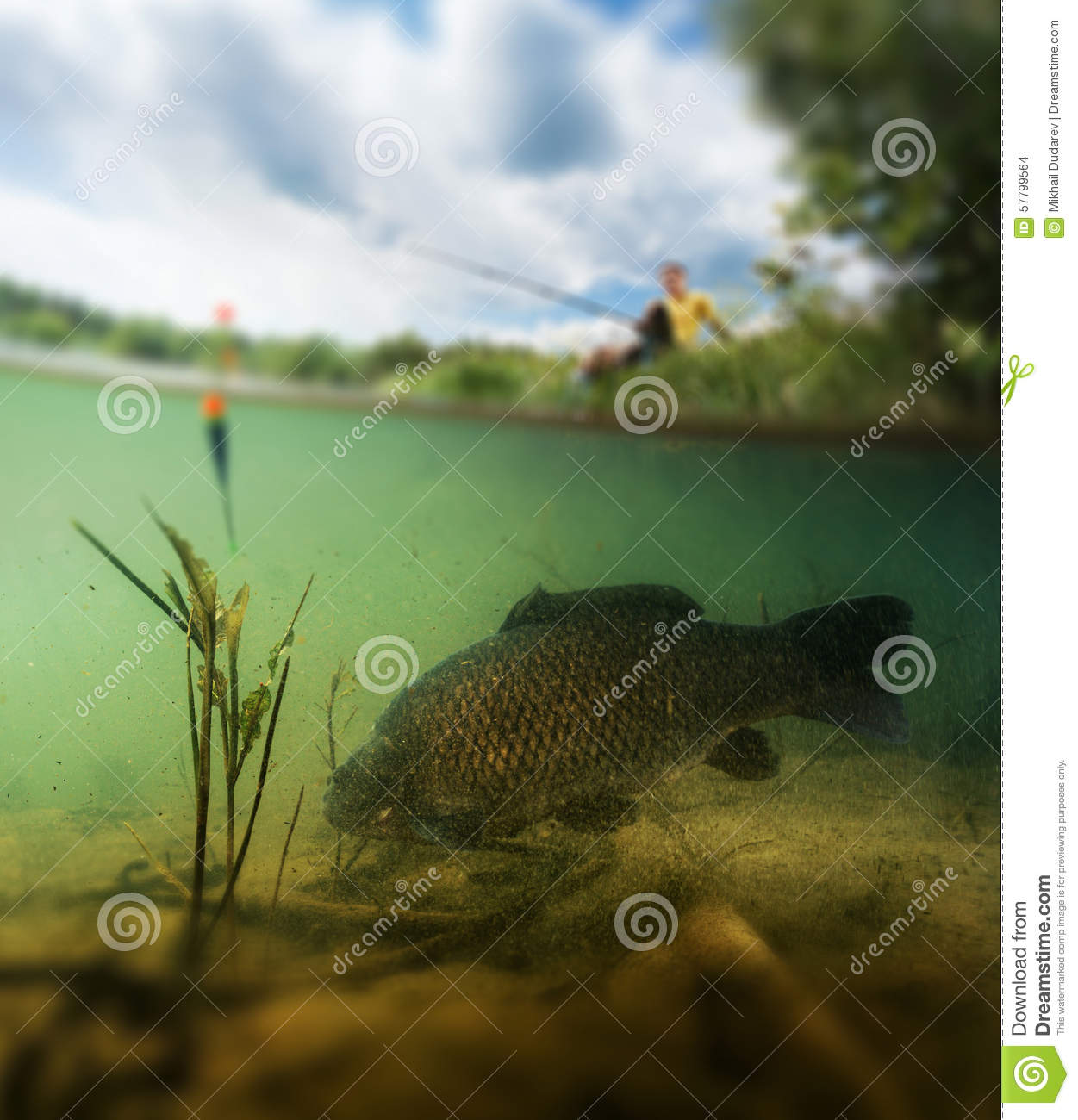 Pond with carp stock photo image 57799564 for Surface fish ponds