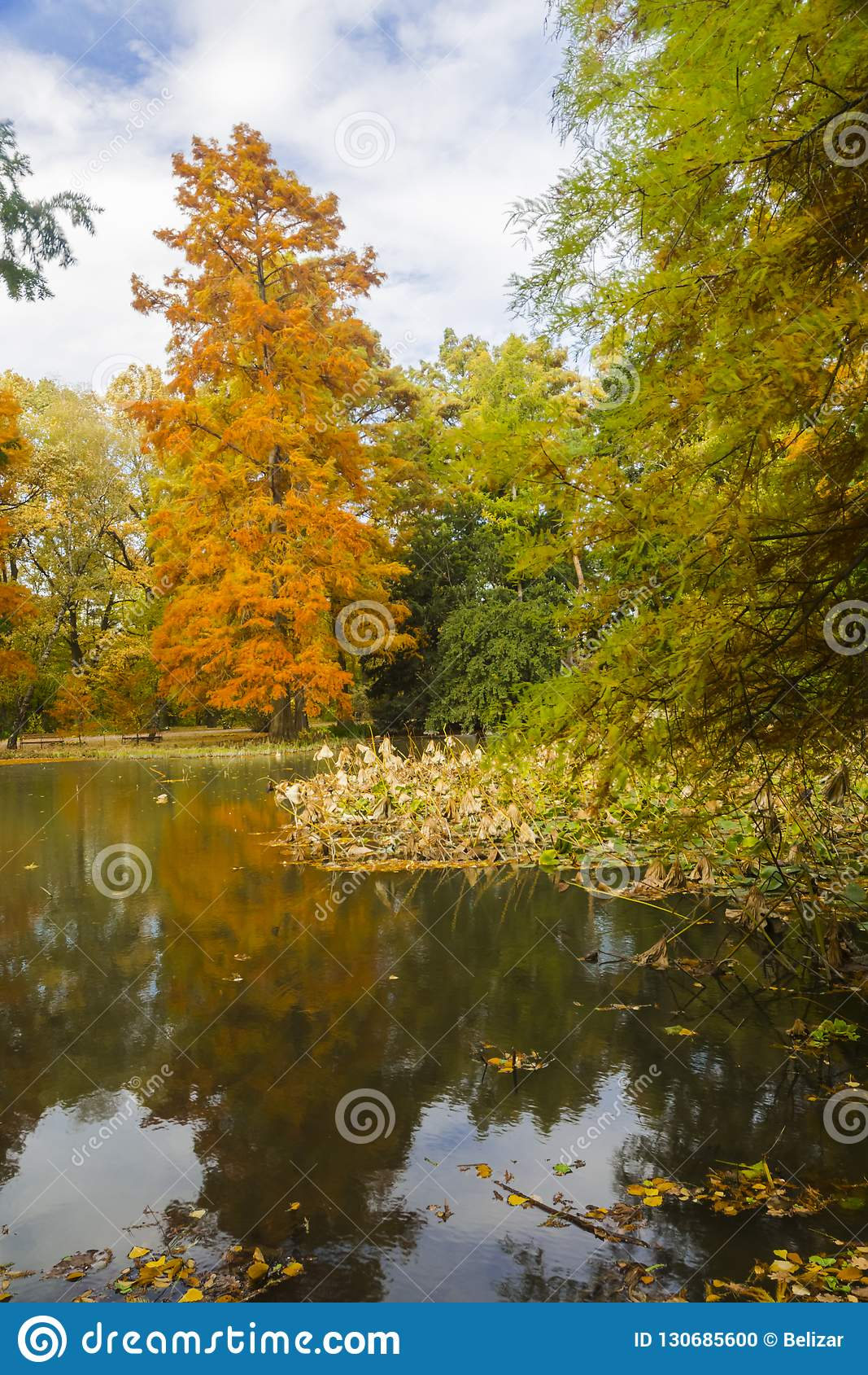 Pond with cypresses