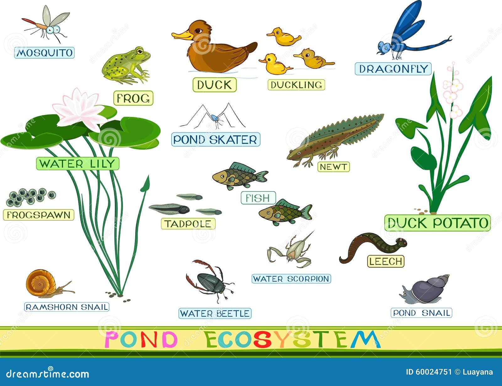 at the pond stock vector image 60024751 Cartoon Ducks in a Pond Cartoon Ducks in a Pond