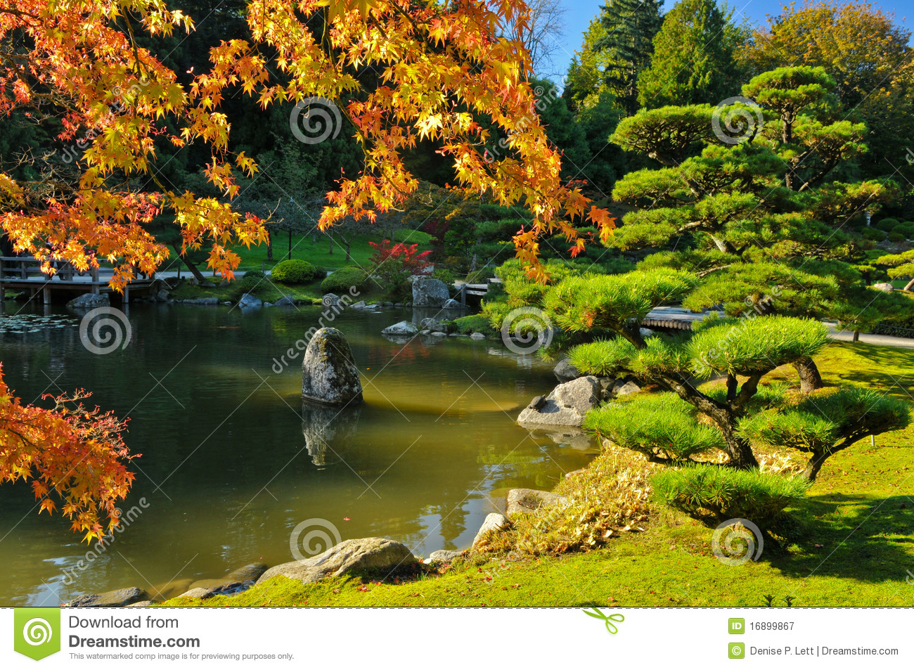 Pond and fall foliage in japanese garden stock image for Garden pool tokyo
