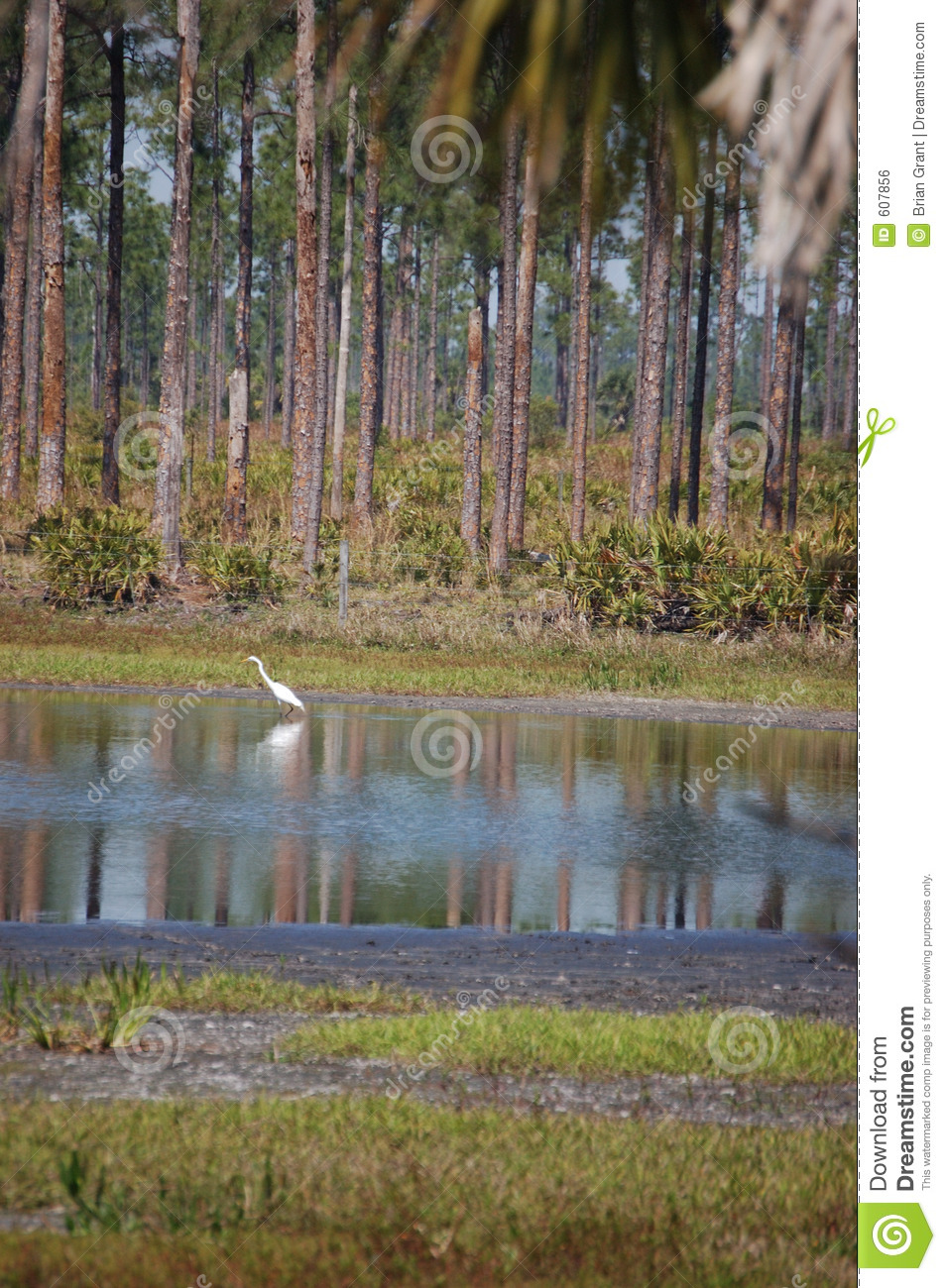 Pond fishing royalty free stock image image 607856 for Stocked fishing ponds near me