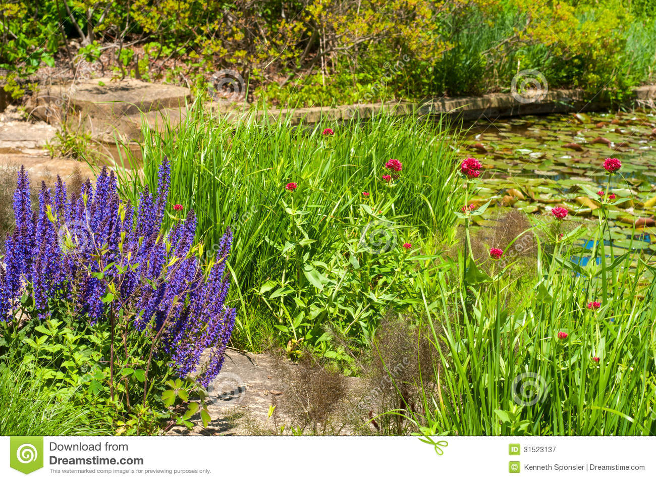 Pond garden royalty free stock photography image 31523137 for Plants for around garden ponds