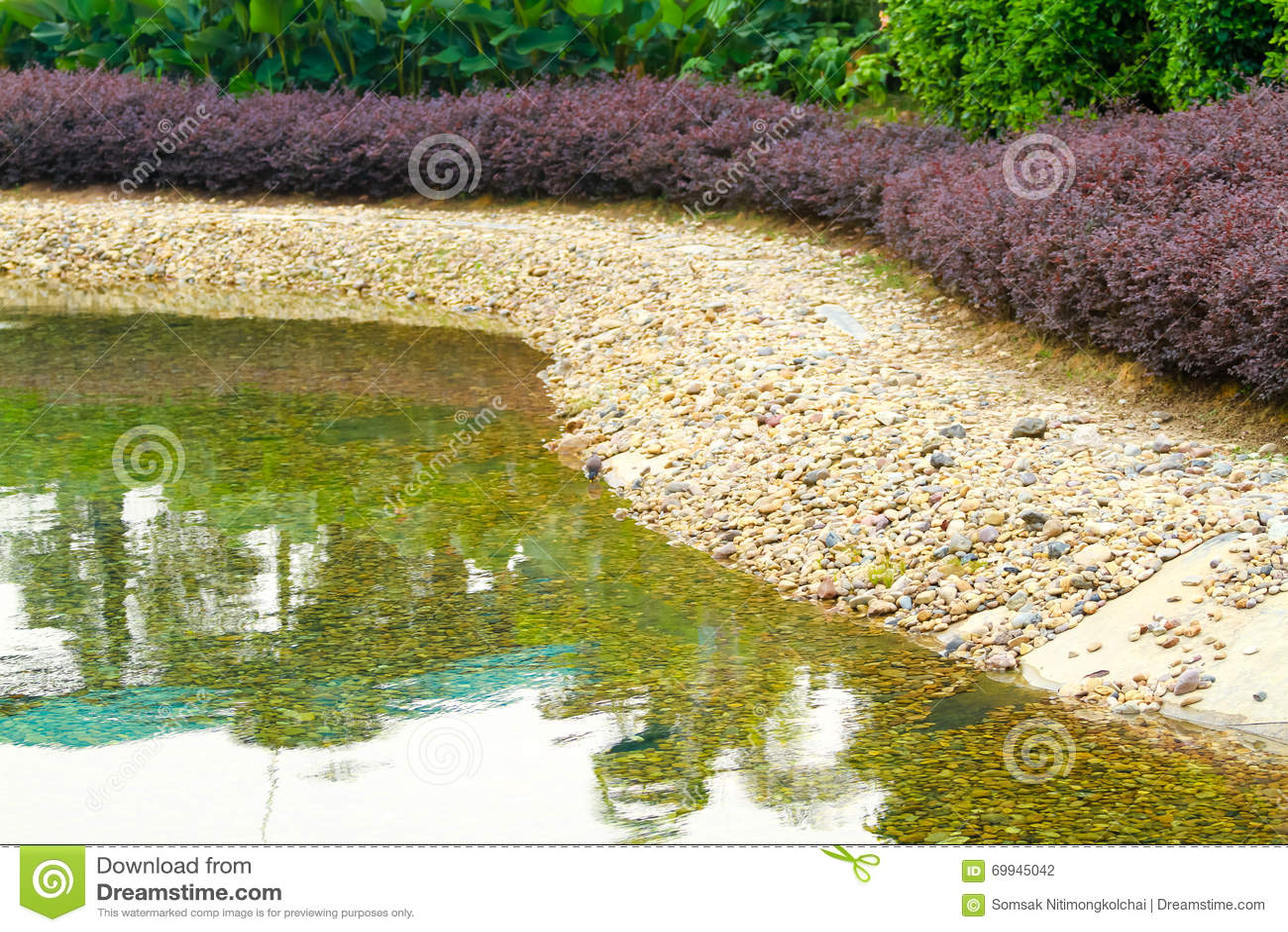 Pond gravel plant in the garden background stock photo for Garden pond gravel