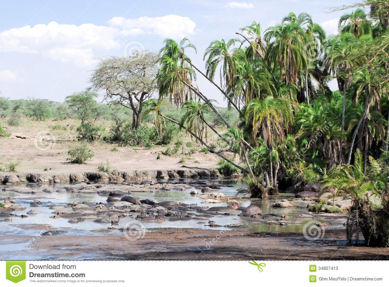 Pond and palms in Serengeti with hippos