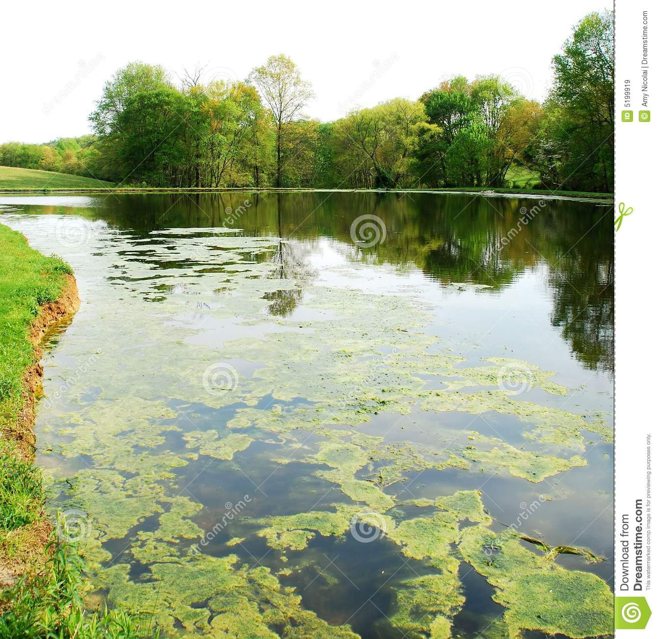 Pond in springtime stock photography for Pond dealers