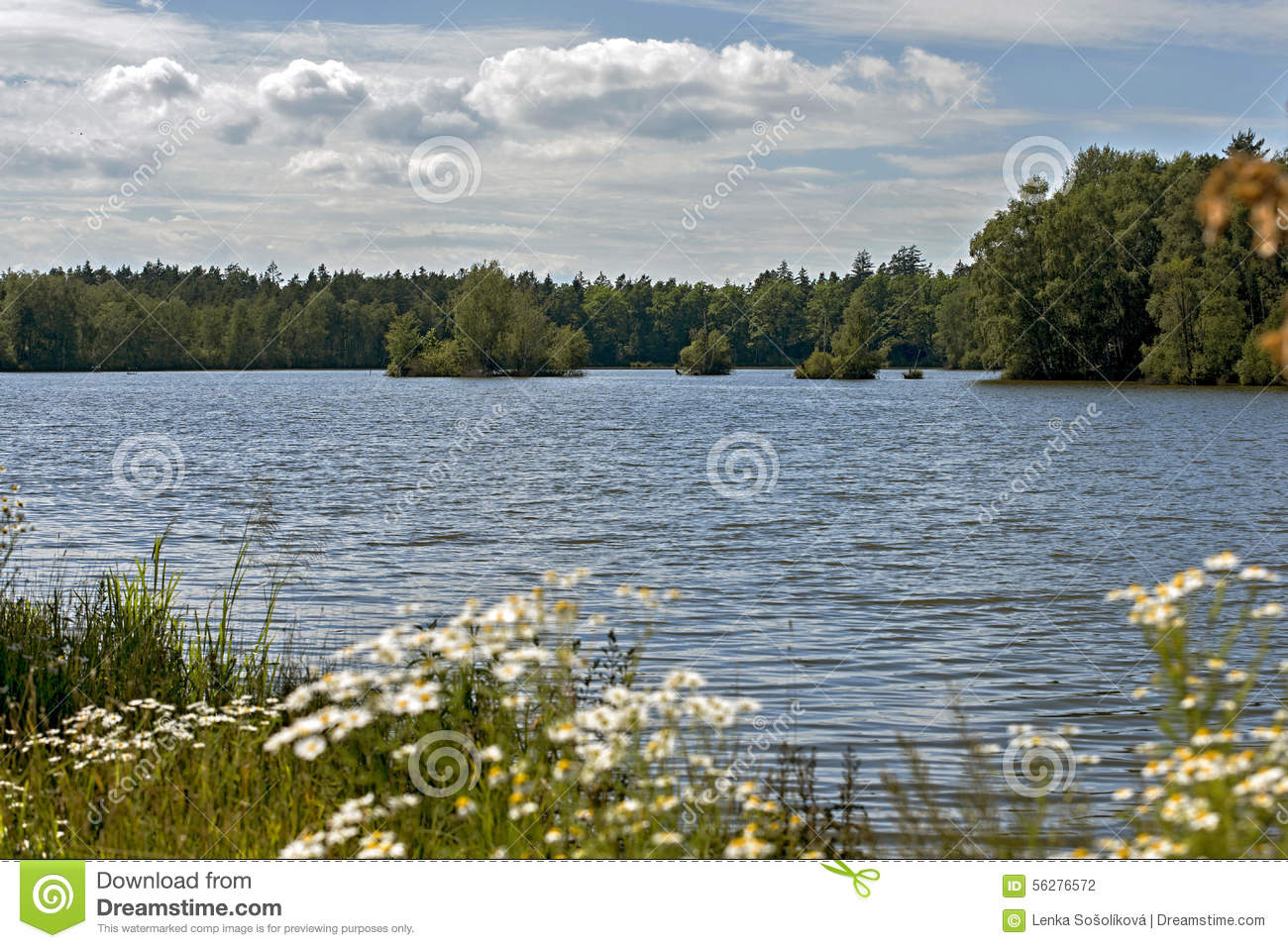 Pond stock photography 7754276 for Pond dealers