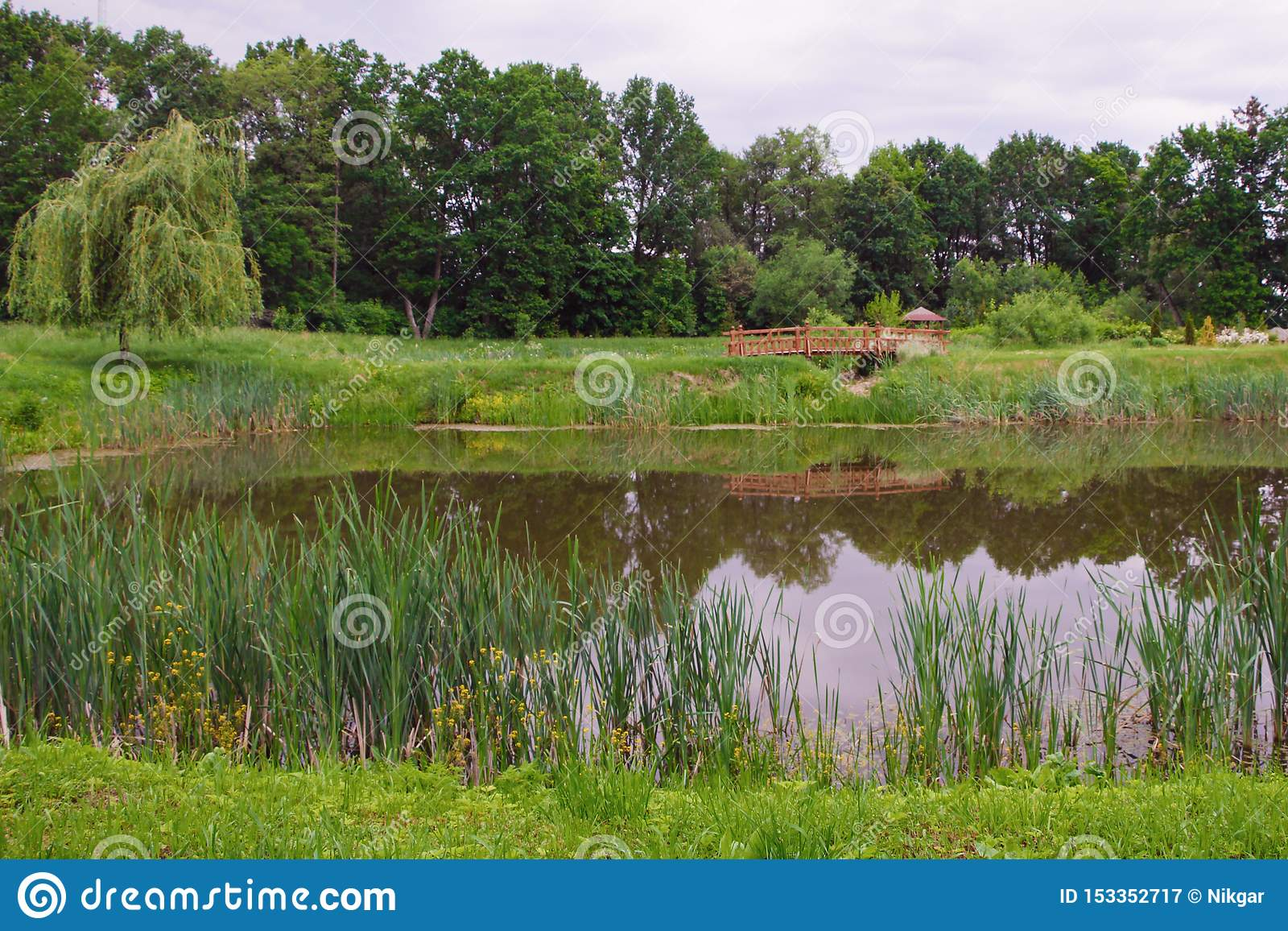 Pond in the summer park