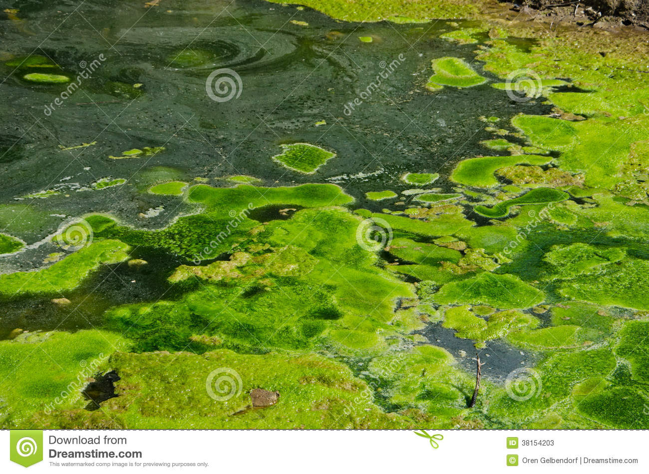 Pond swamp water stock photos image 38154203 for Green pond water