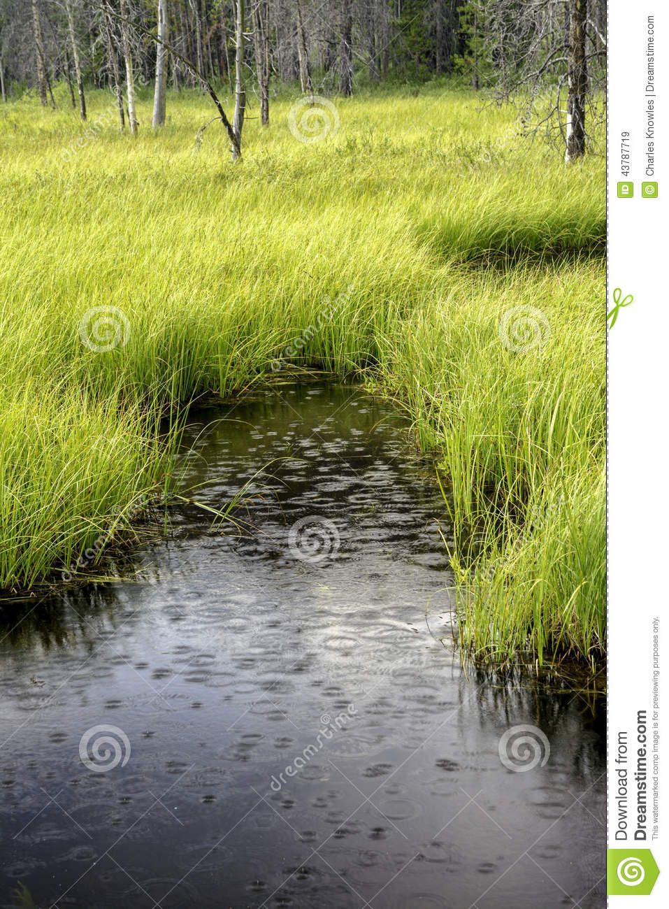 Pond Of Water In The Forest With Rain Drops Stock Photo