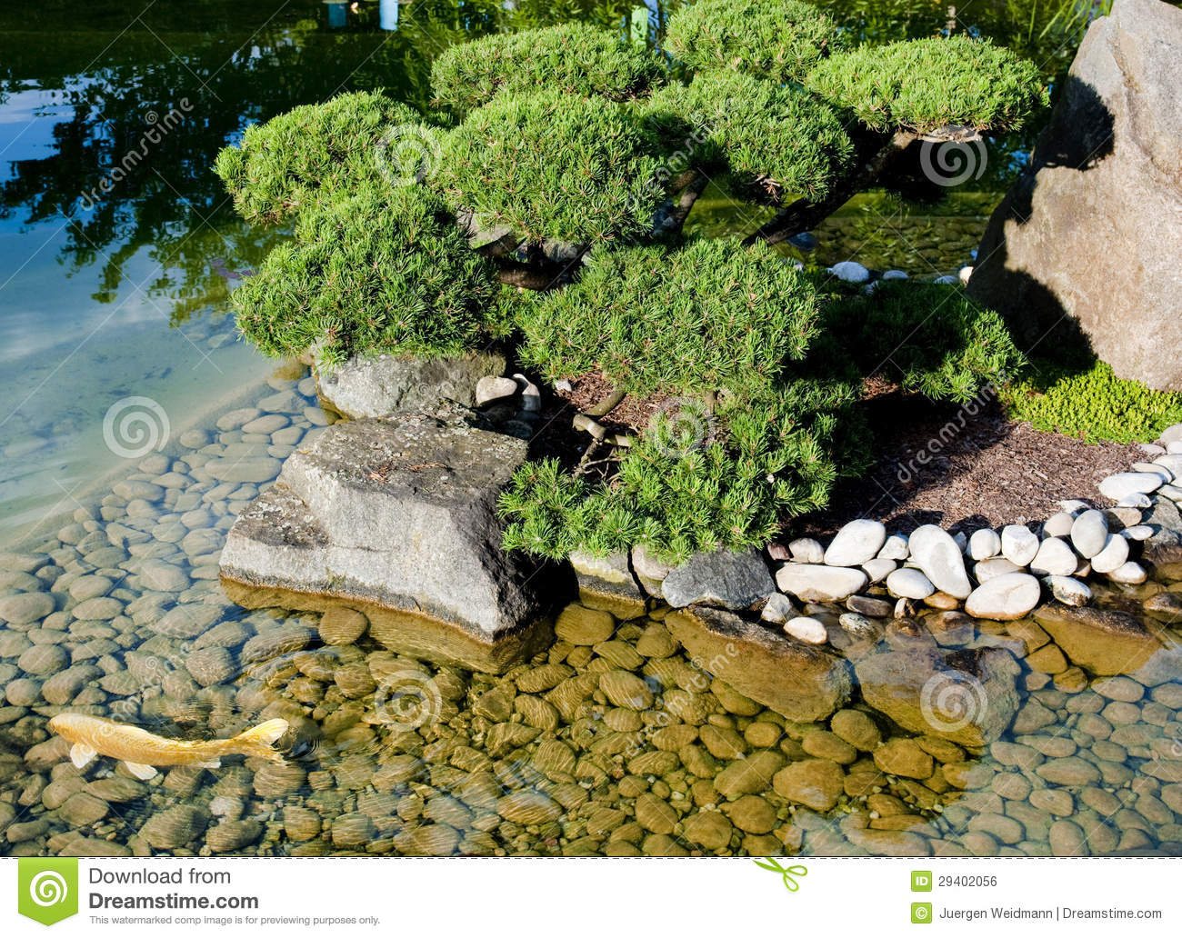 Pond in the zen garden royalty free stock image image for Garden pool zen area