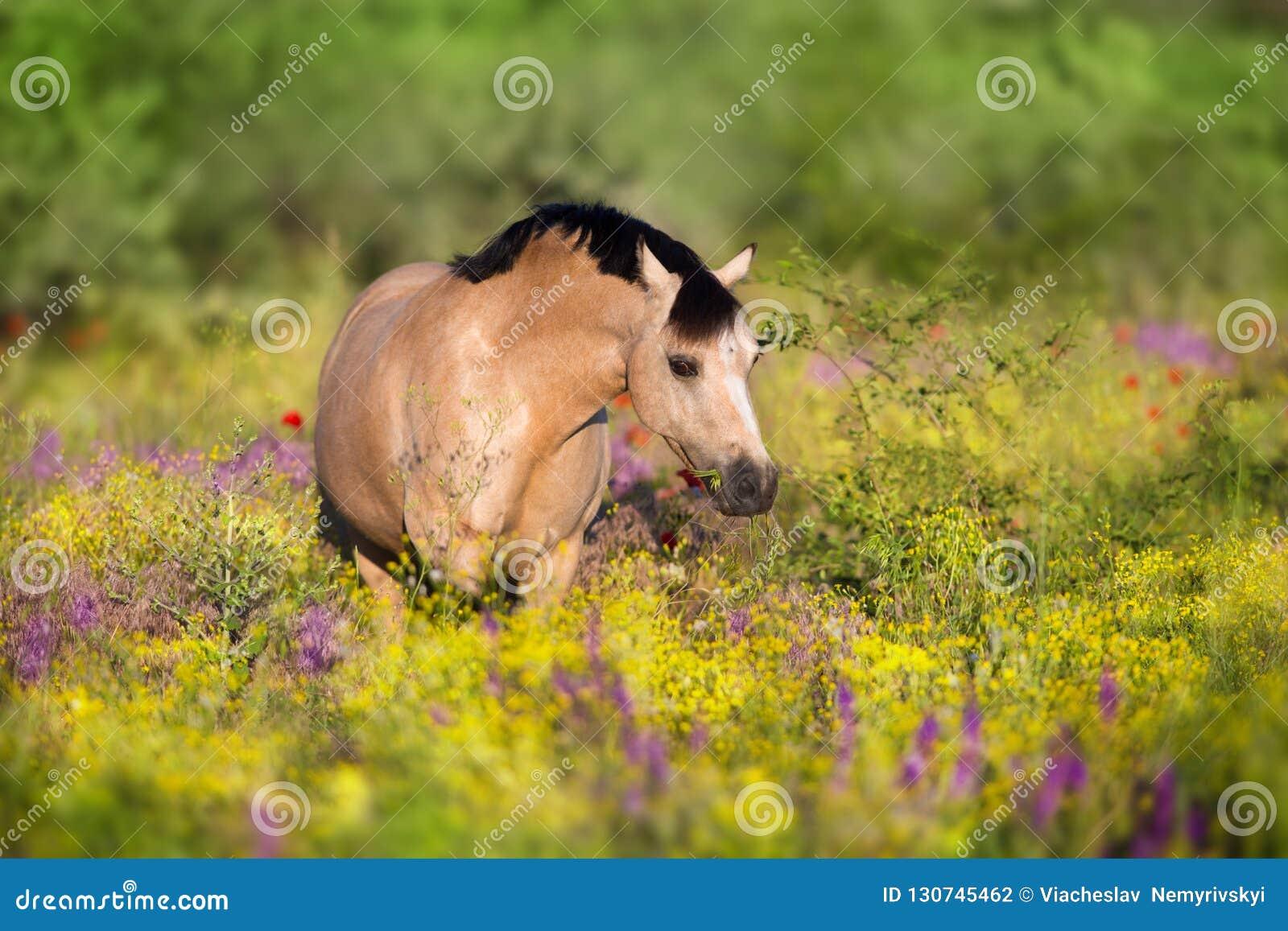 Poney brun grisâtre en fleurs