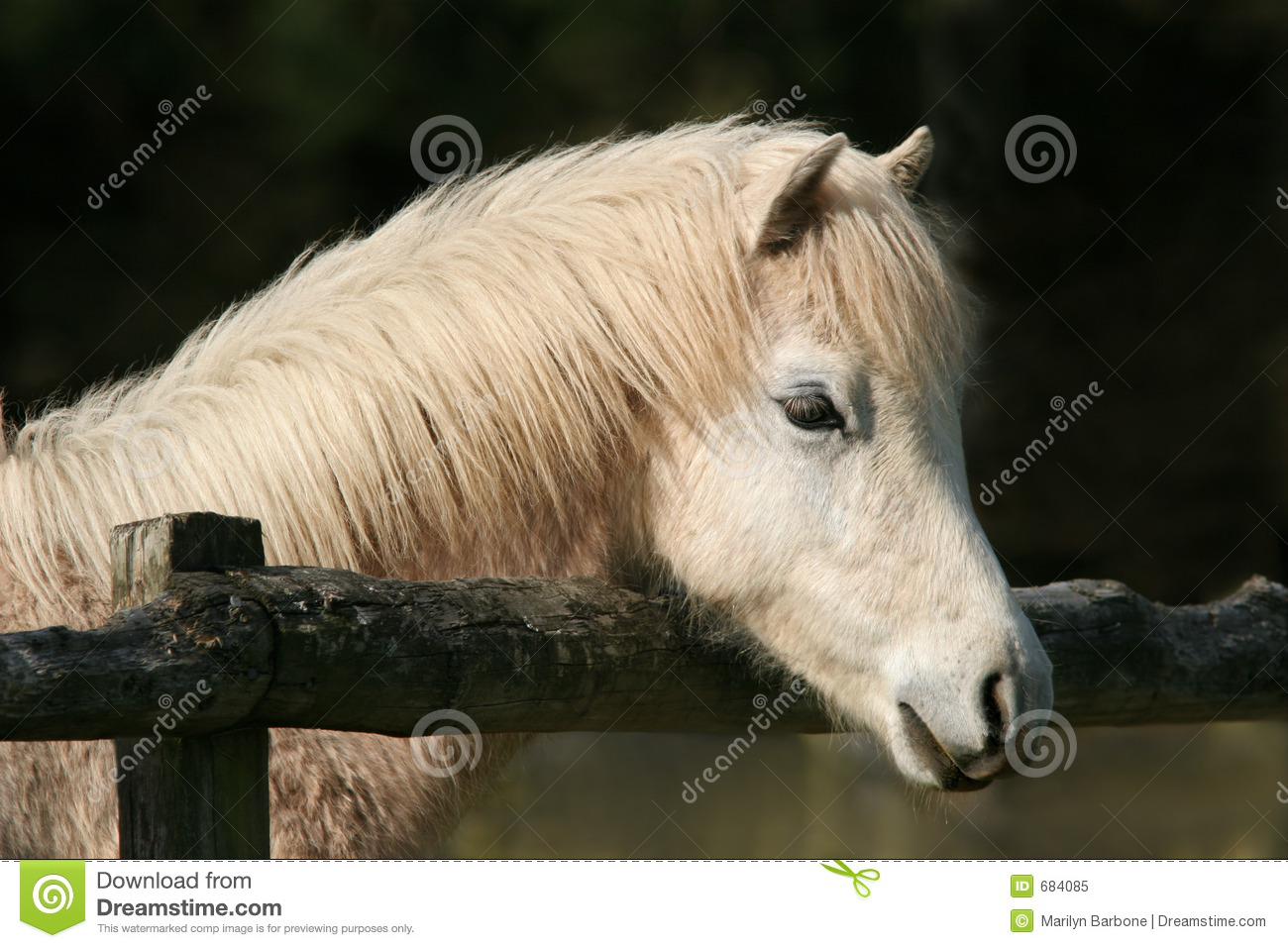 Poney paisible image stock image du multiplication for Multiplication cheval
