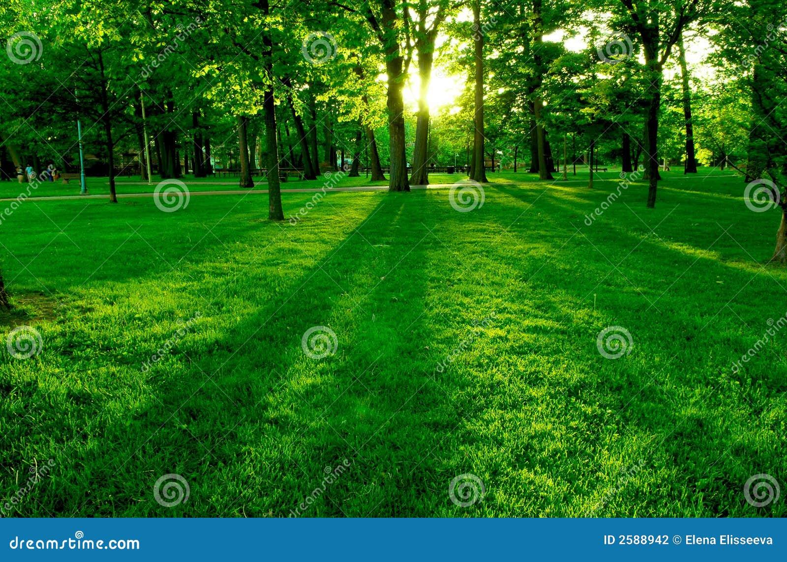 Ponga verde el parque